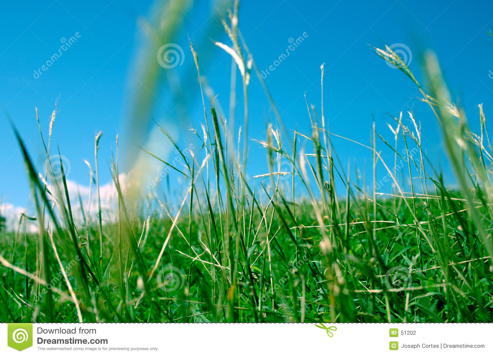 Download Herbe verte 2 photo stock. Image du anglais, côte, pays - 51202