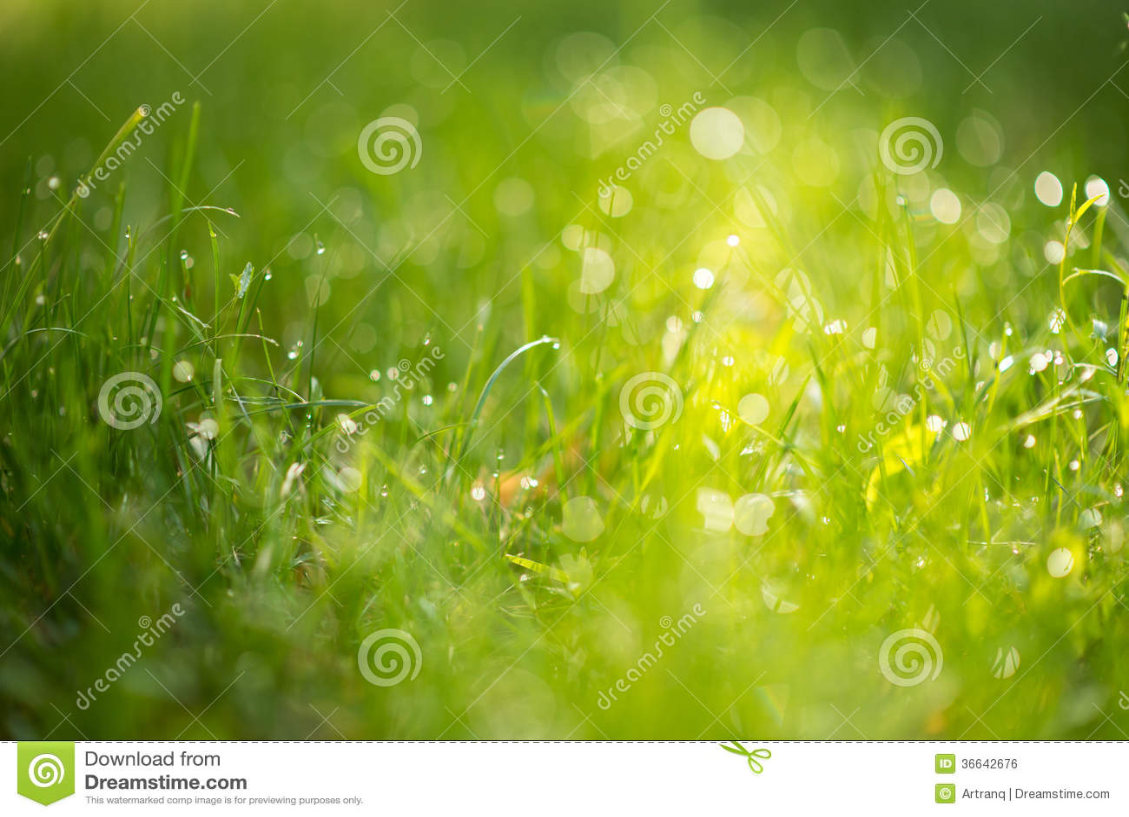 Herbe verte avec la rosée à la lumière du soleil