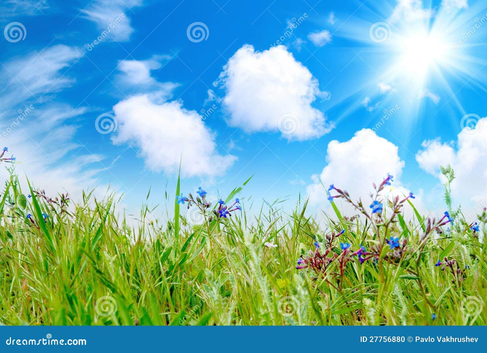 Herbe verte avec le ciel nuageux