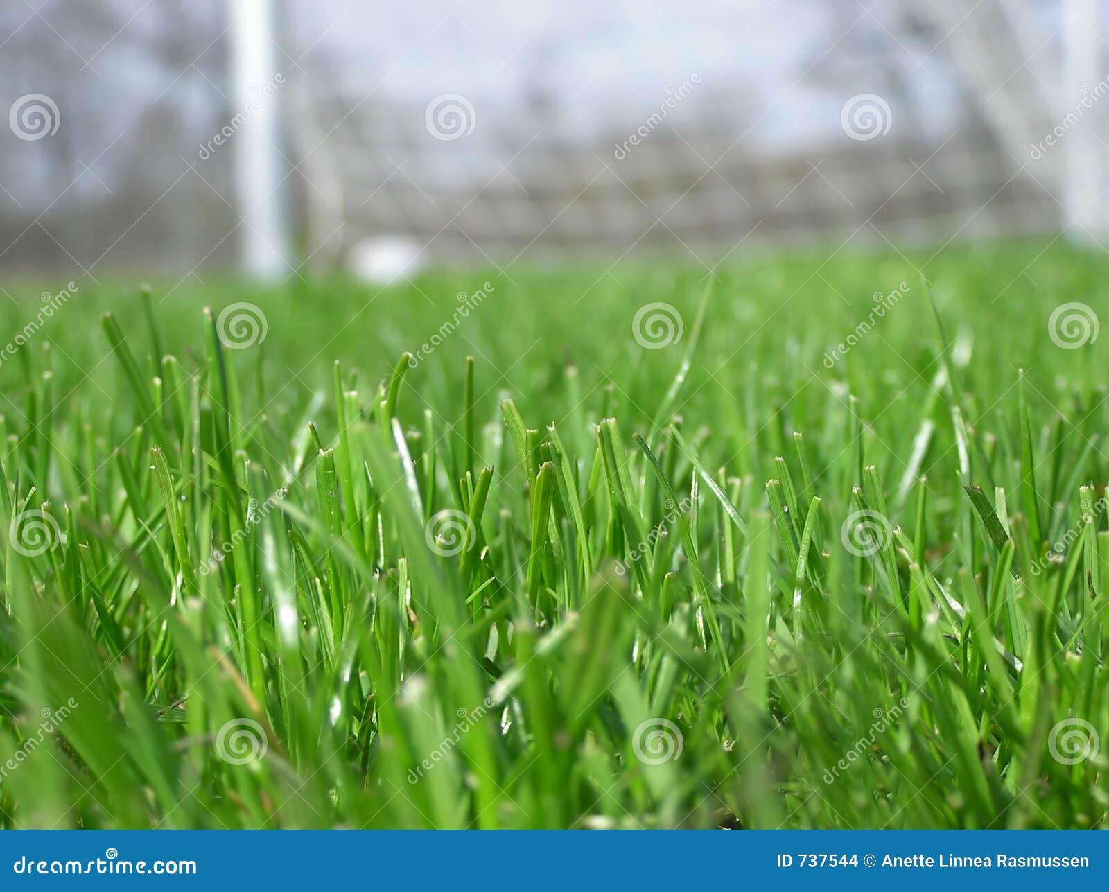 Herbe verte avec le filet du football
