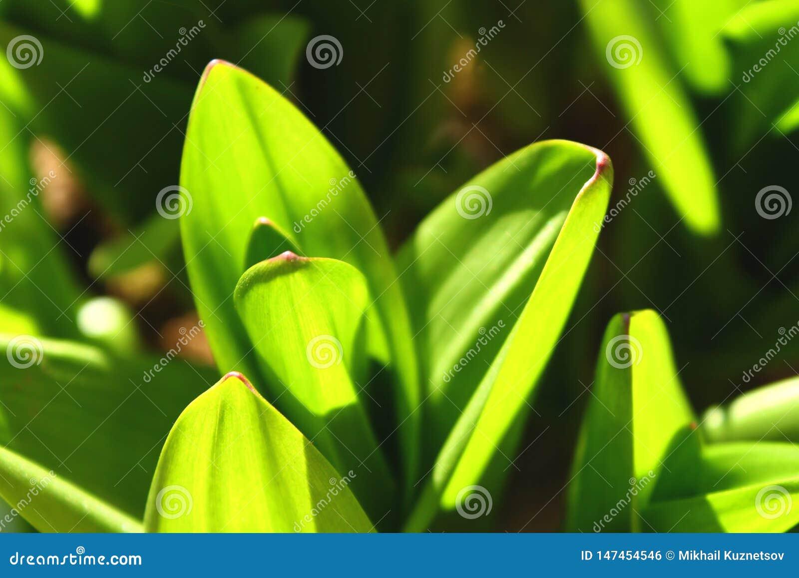 Herbe verte parfaite et mouiller le fond abstrait