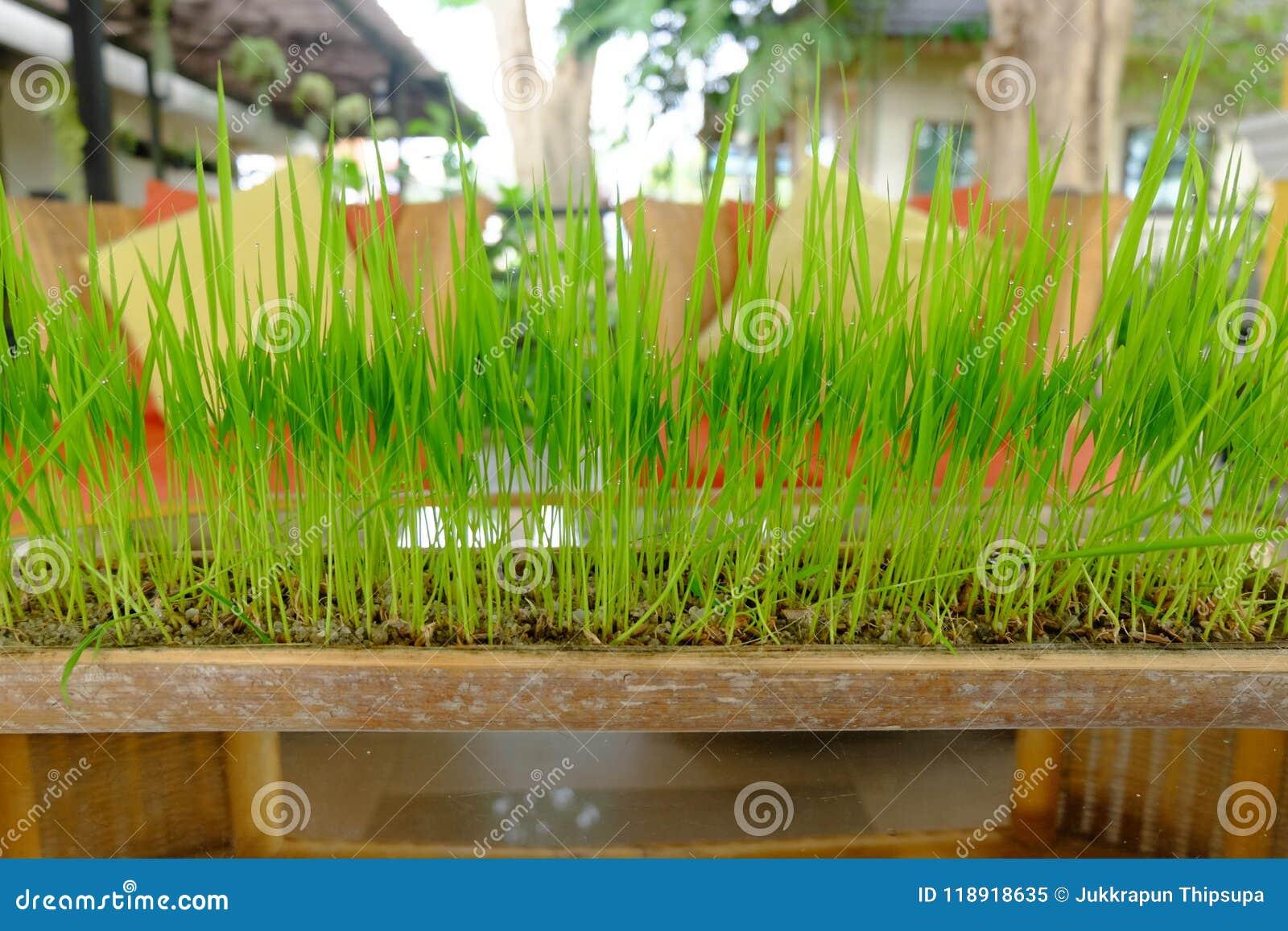 Herbe verte s élevant dans un pot fait à partir du bambou
