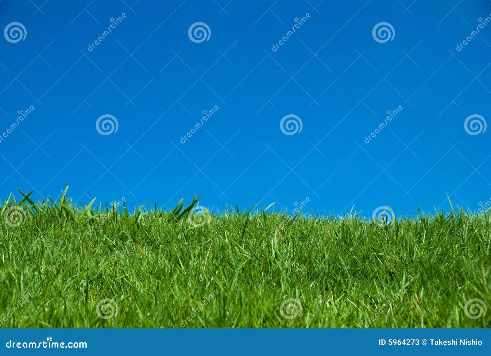Herbe verte sous le ciel bleu