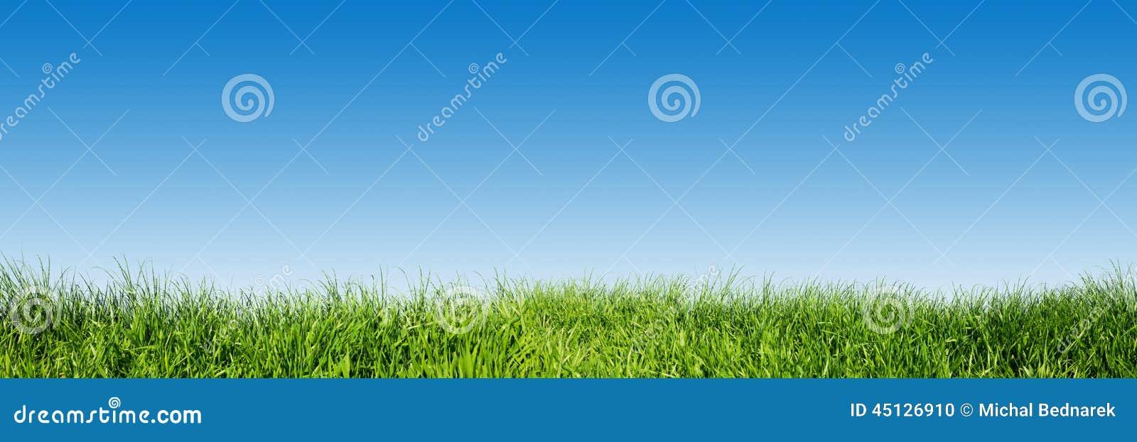 Herbe verte sur le ciel clair bleu, panorama de nature de ressort