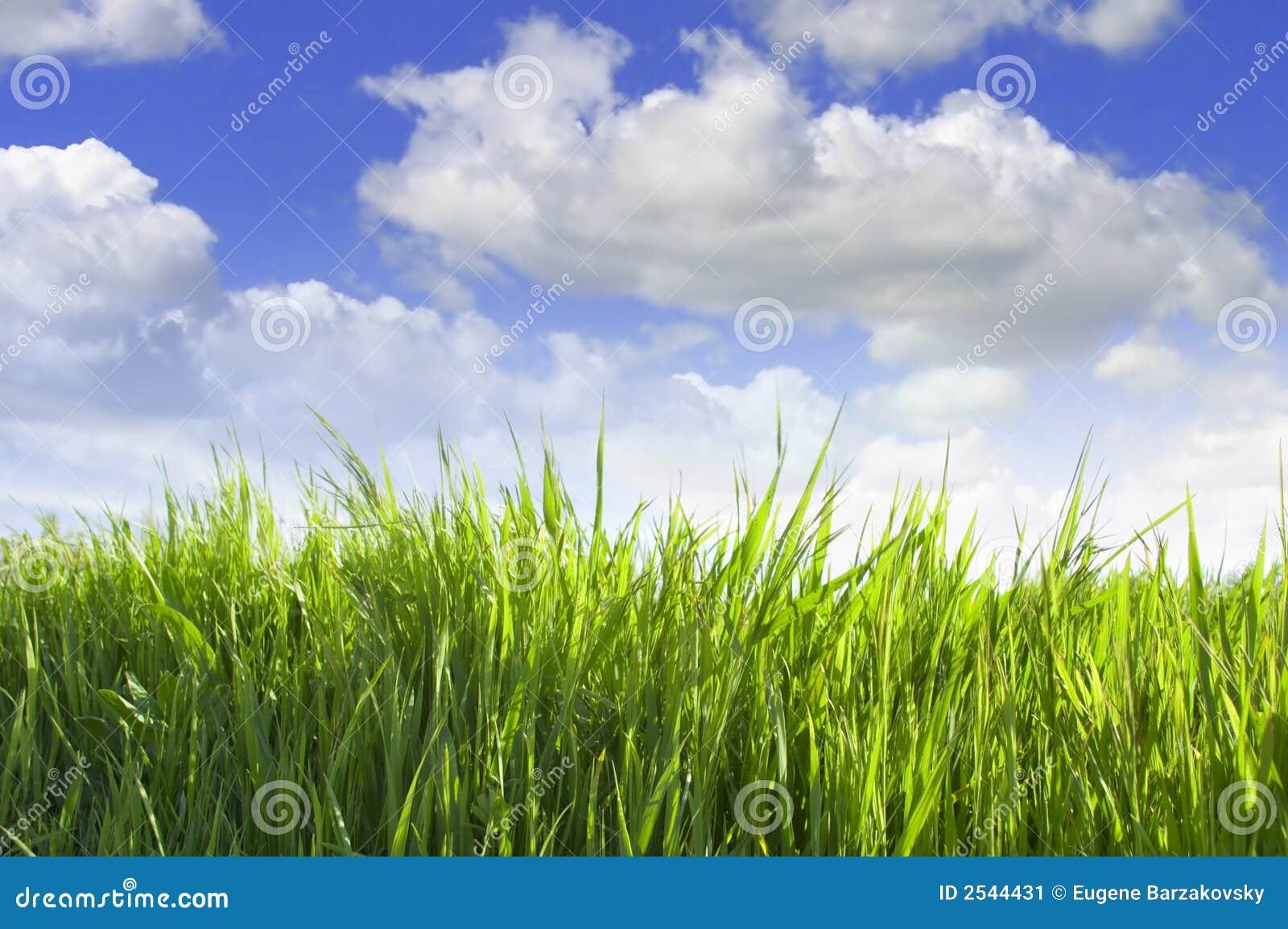 Herbe verte sur le fond de ciel