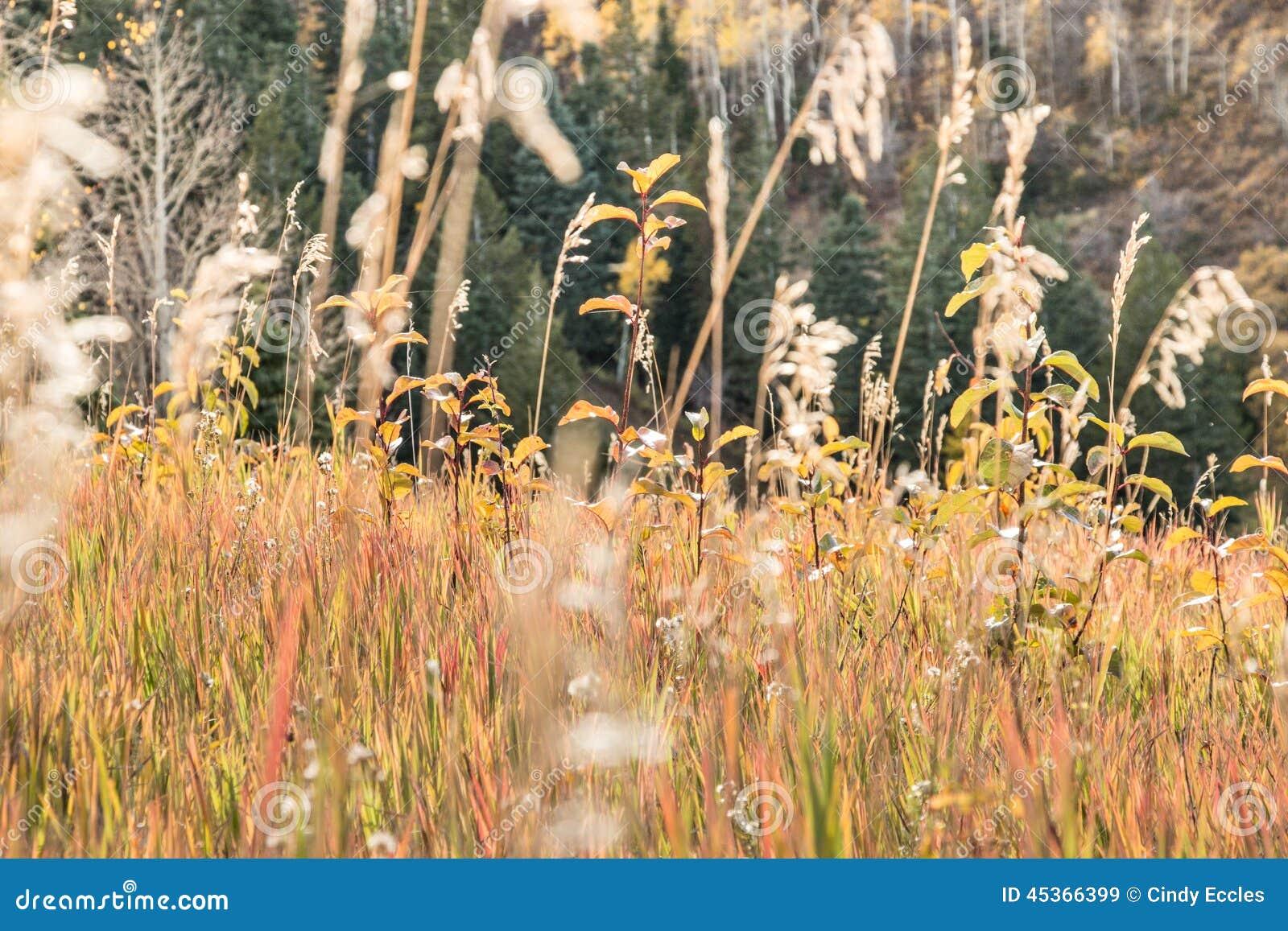 Herbes alpines changeant des couleurs