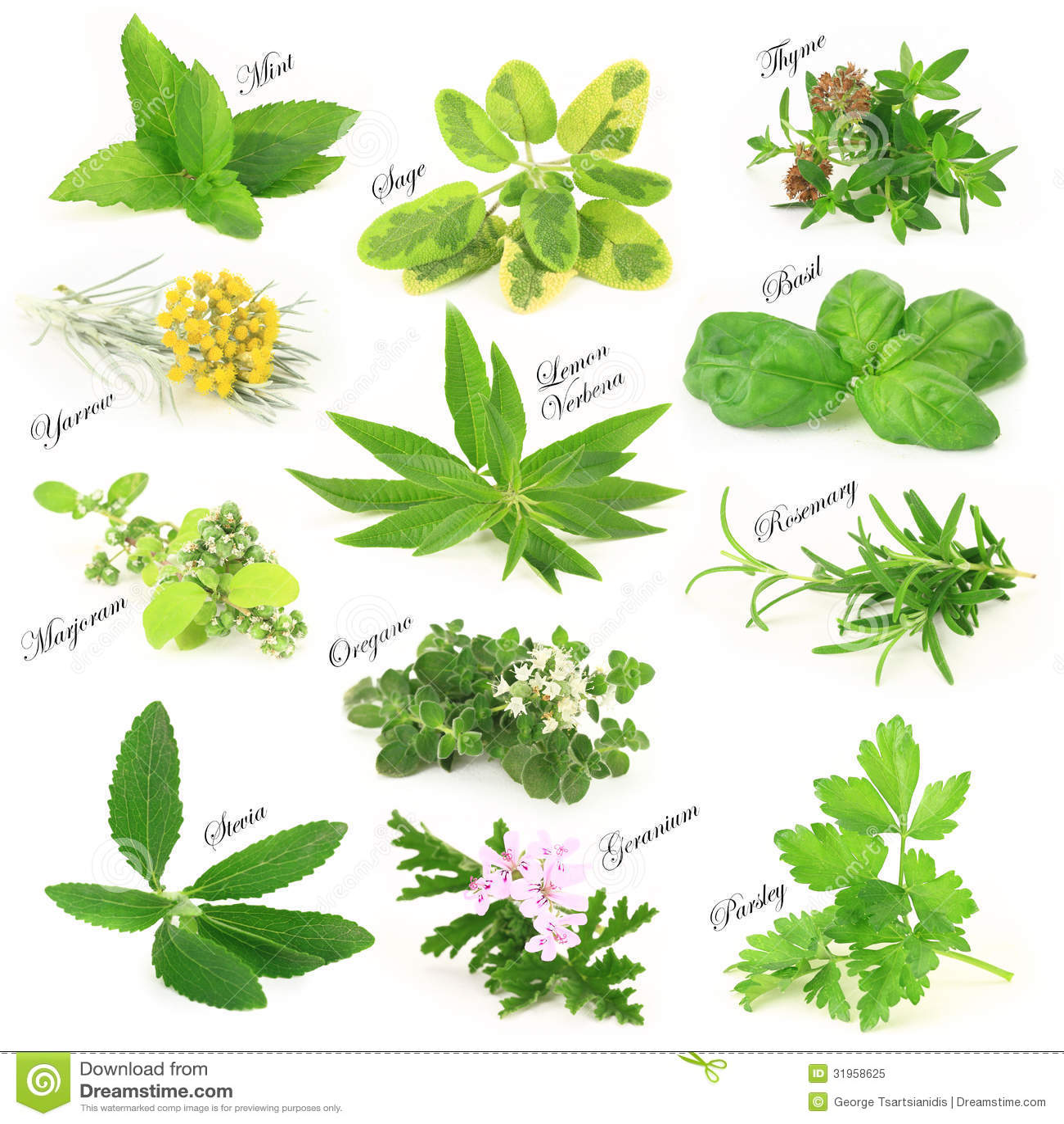 herbes aromatiques fra ches photo libre de droits image 31958625. Black Bedroom Furniture Sets. Home Design Ideas