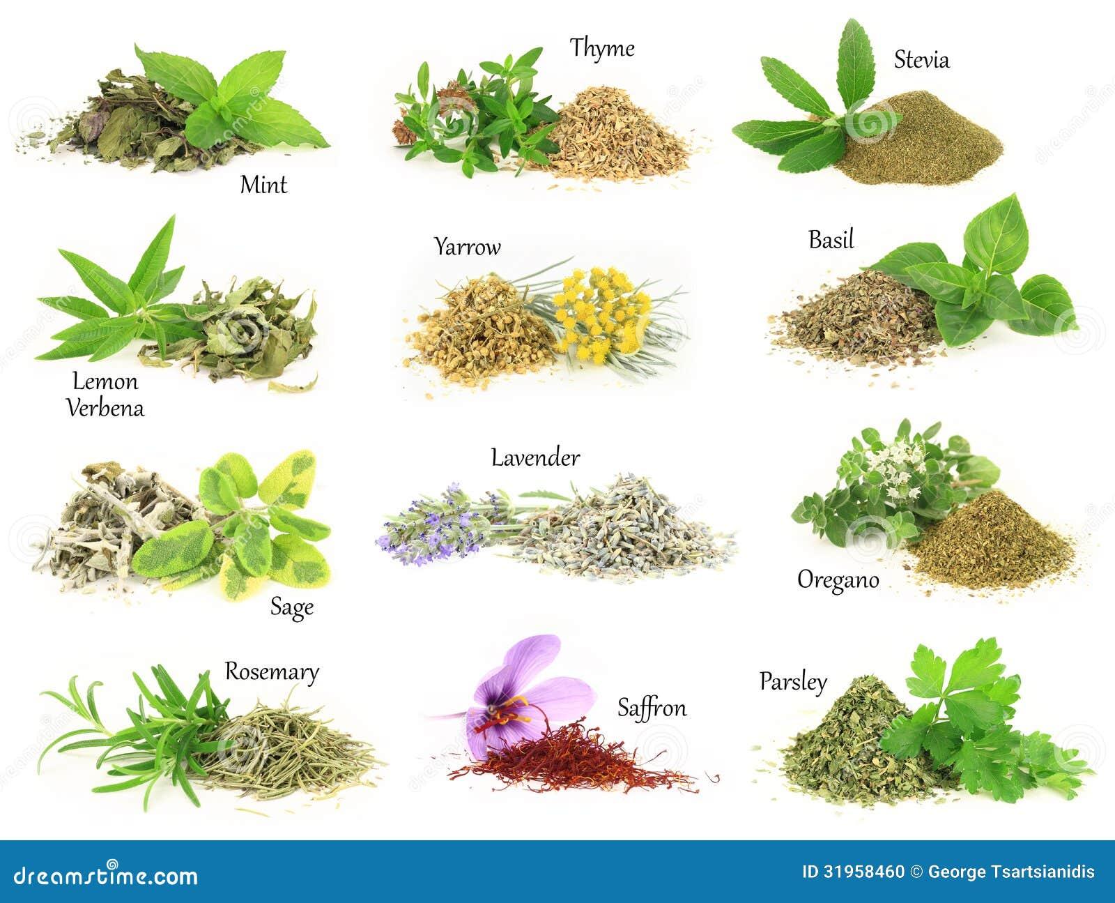 herbes aromatiques fra ches et s ches photo stock image du lame monnayage 31958460. Black Bedroom Furniture Sets. Home Design Ideas
