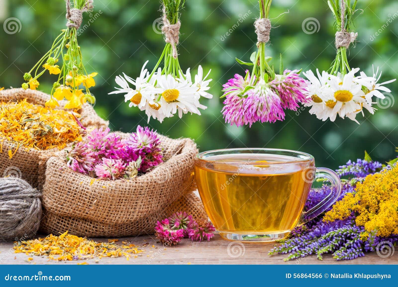 Herbes curatives, sacs avec les usines sèches et tasse de thé