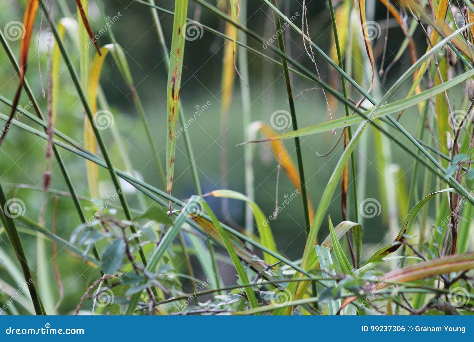 Herbes Dans Le Jardin Anglais Plan Rapproche Avec La Lavande Et