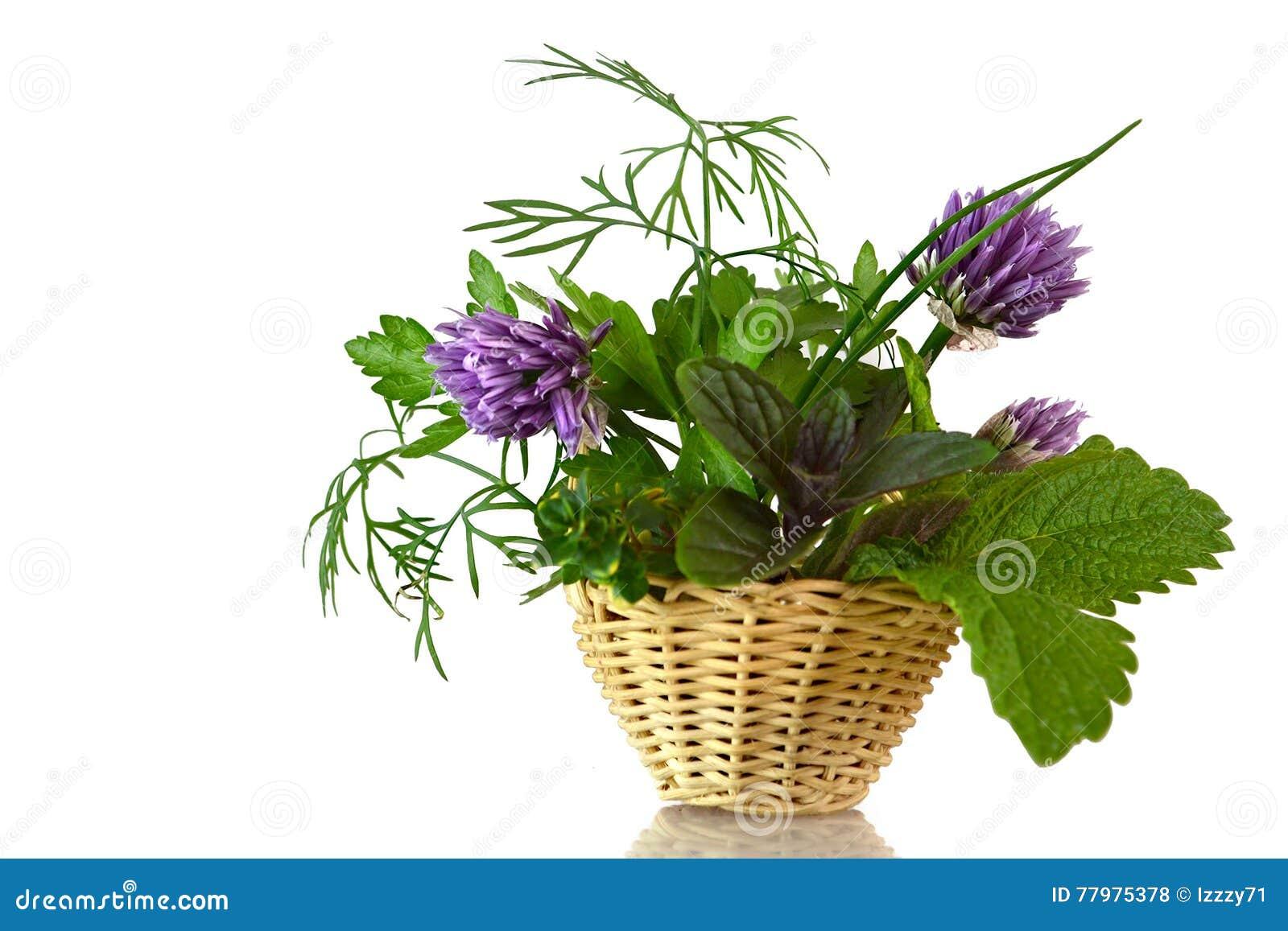 Herbes fraîches dans le panier