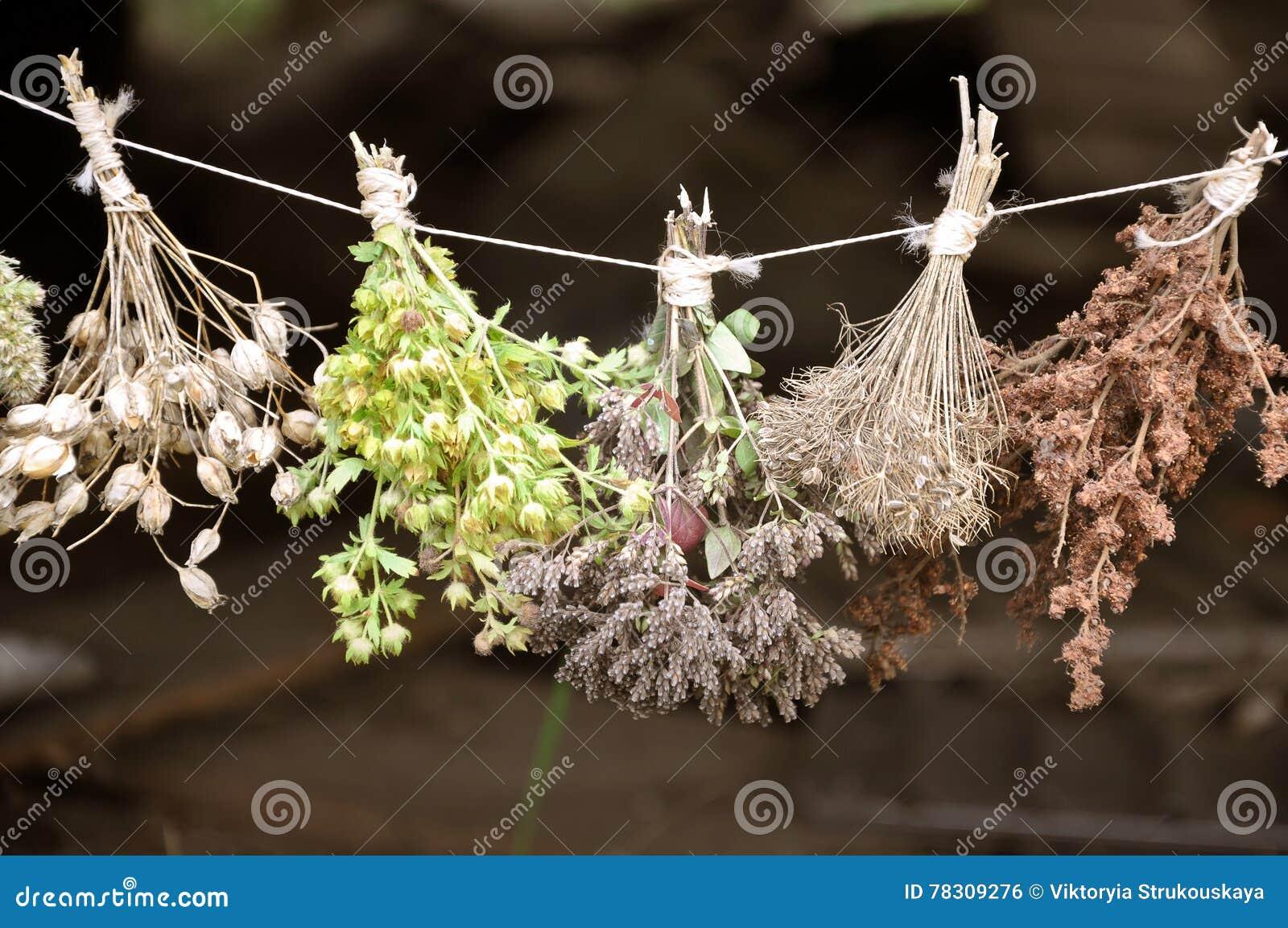 Herbes sèches liées par paquets