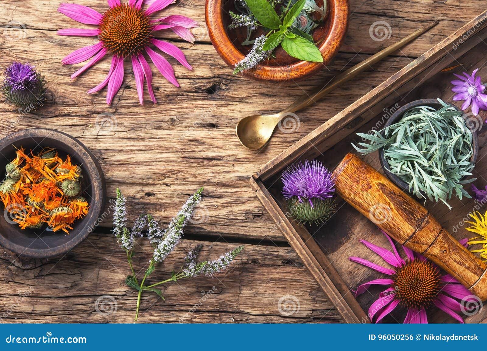 Herbes saines figées