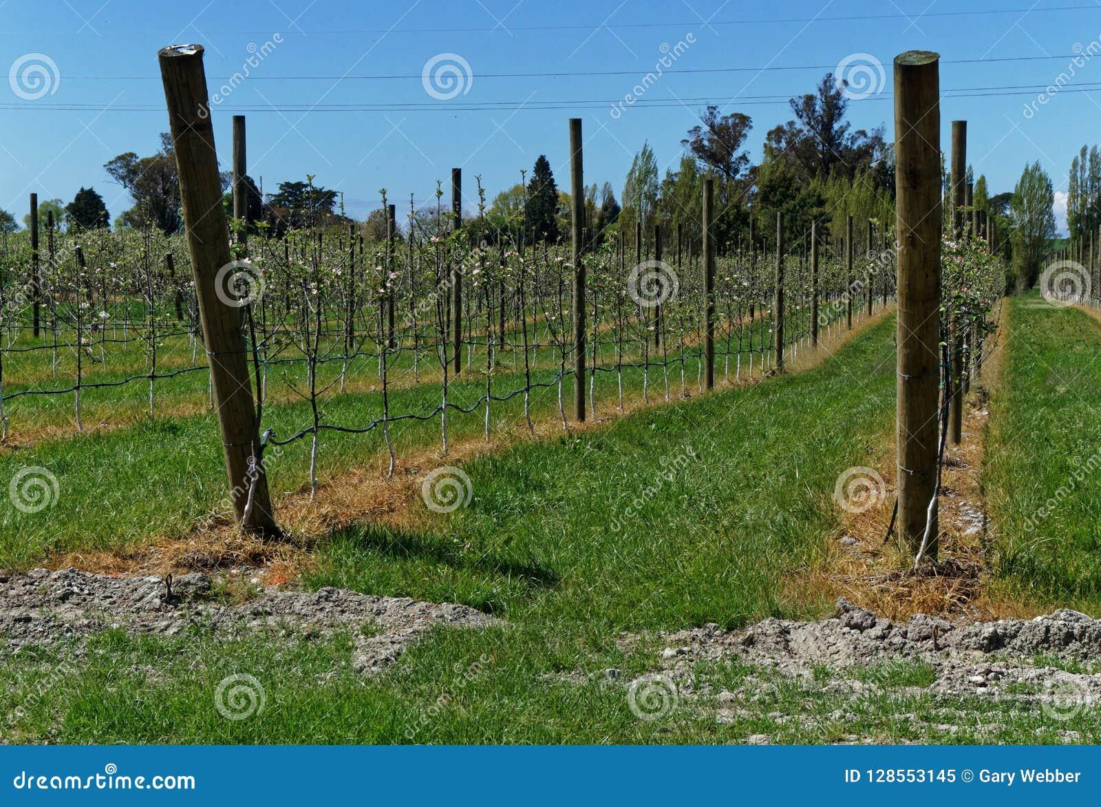 Herbicydu use, jabłczany sad, Nowa Zelandia