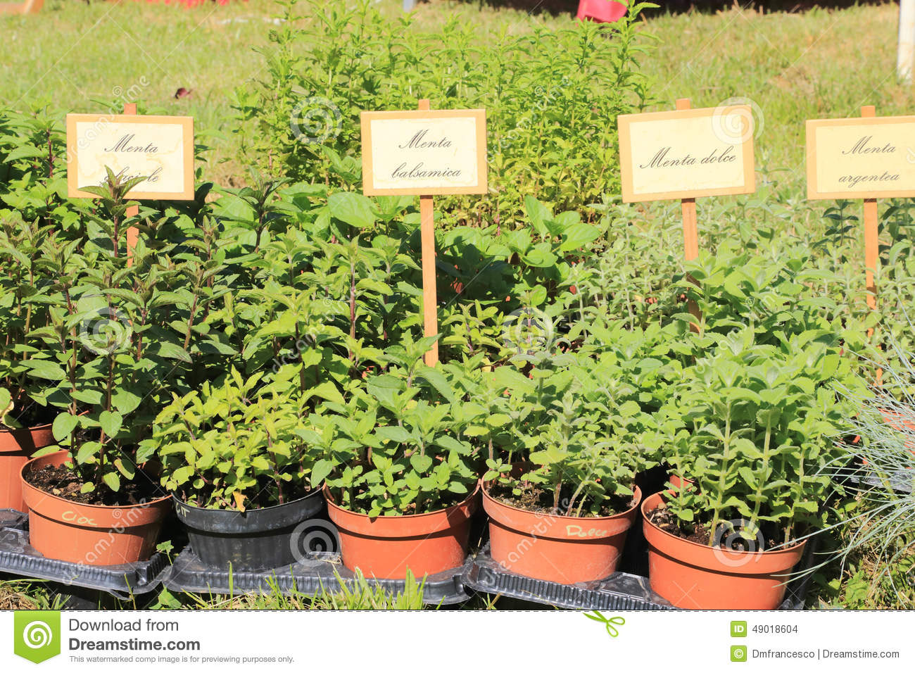 Herbs And Aromatic S