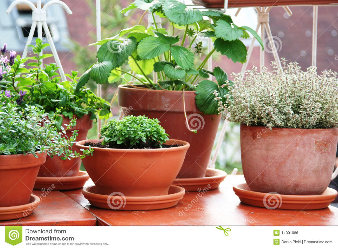 Herbs And Berry Plant On The Balcony Stock Photo Image