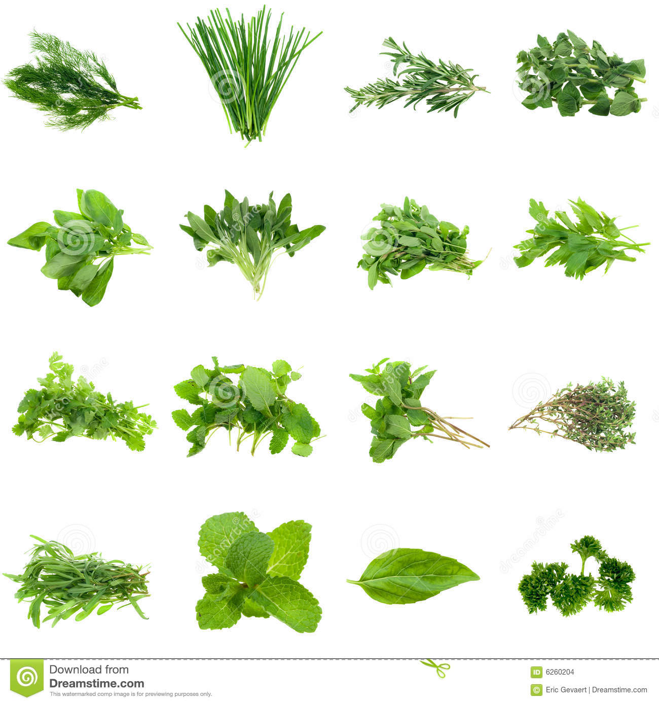 herbs collection stock images image 6260204