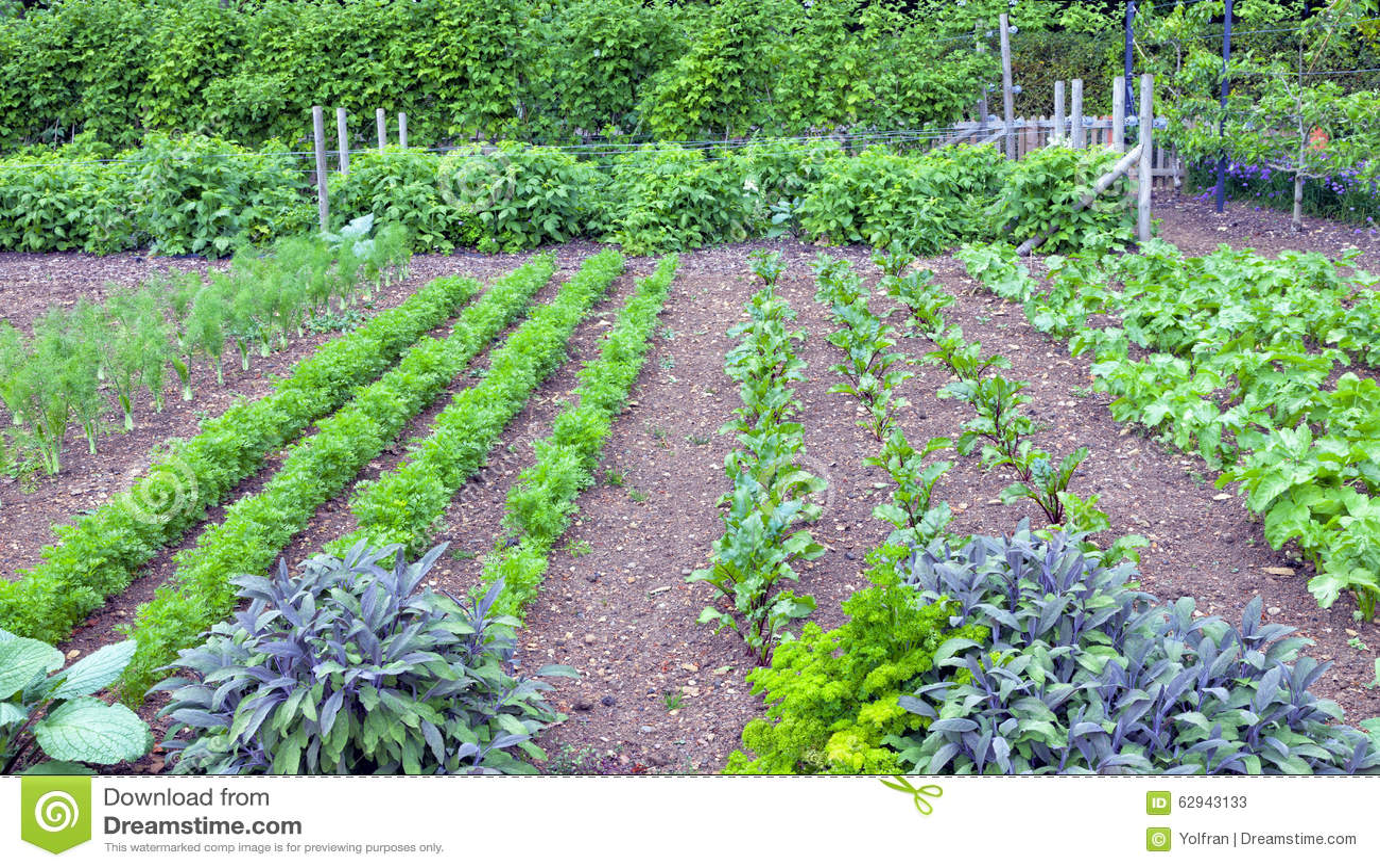 Vegetable garden rows - Royalty Free Stock Photo
