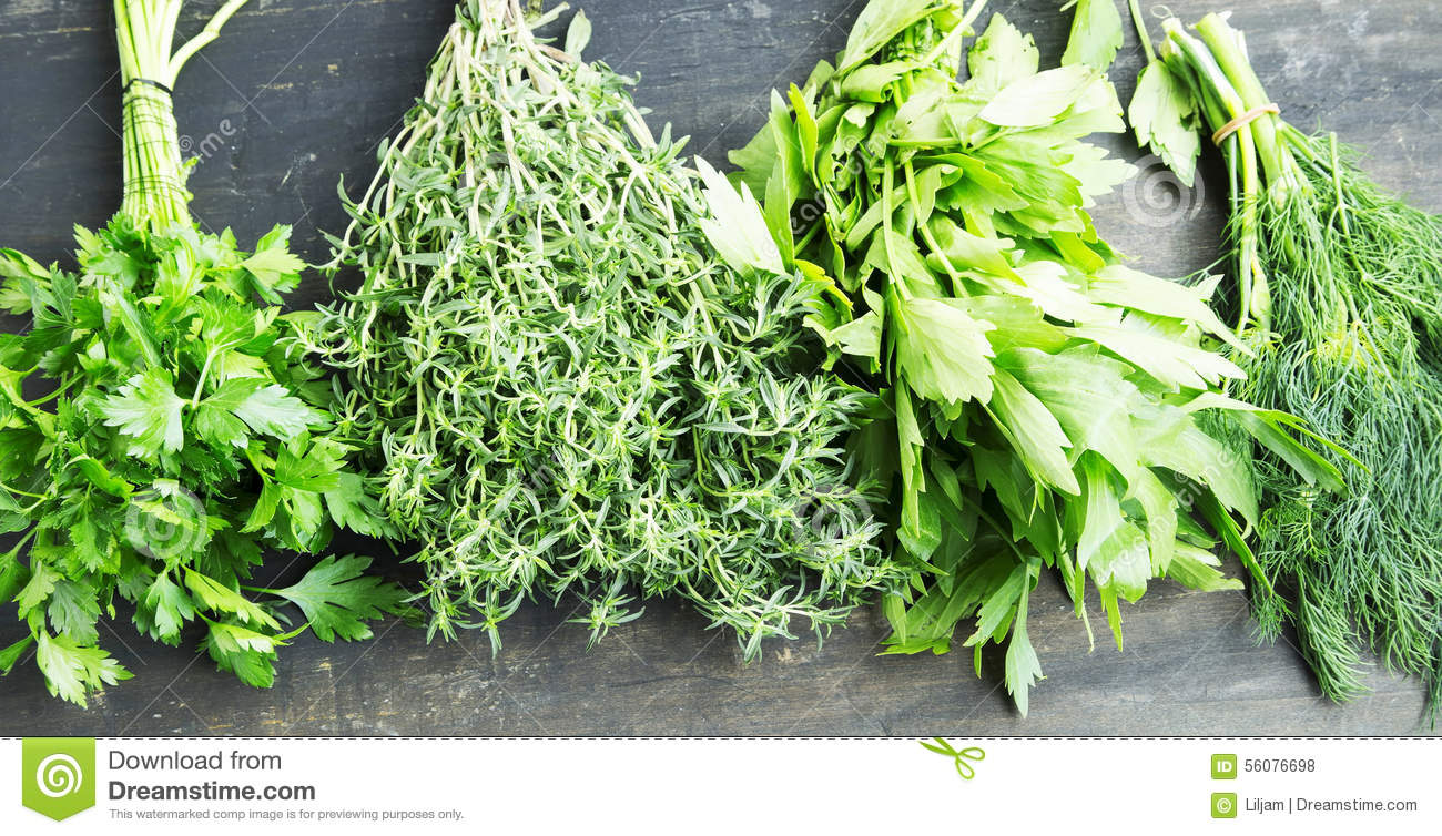 Herbs parsley thyme dill and lovage cooking herbs stock photo image 56076698 - Tips planting herbs lovage parsley dill ...