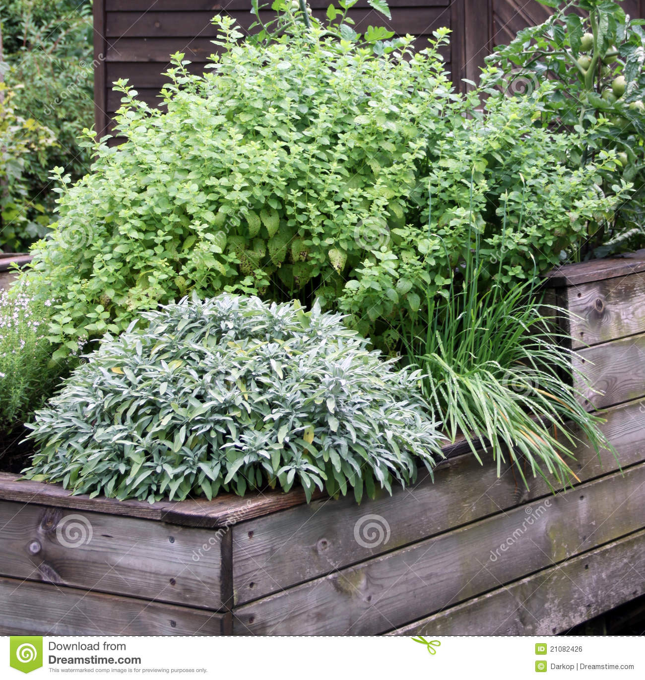 Herbs Plant On The Raised Garden Bed Stock Photo Image Of Raised