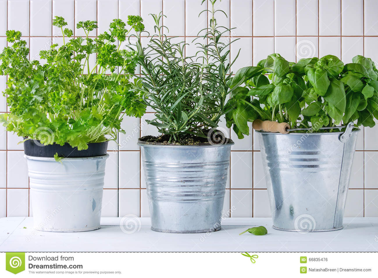 Herb pots for kitchen - Herbs In Pot