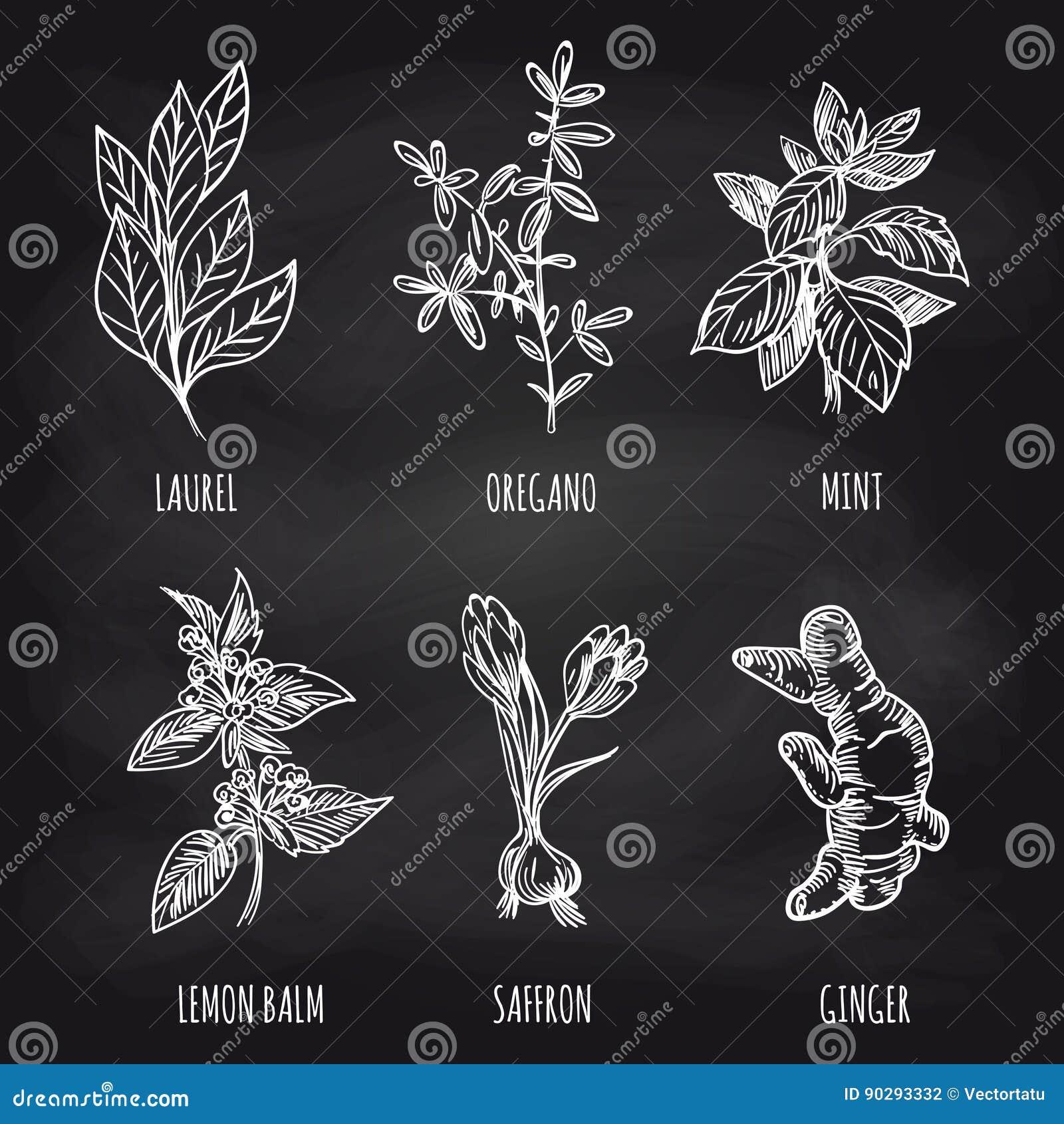 Herbs and spice on blackboard
