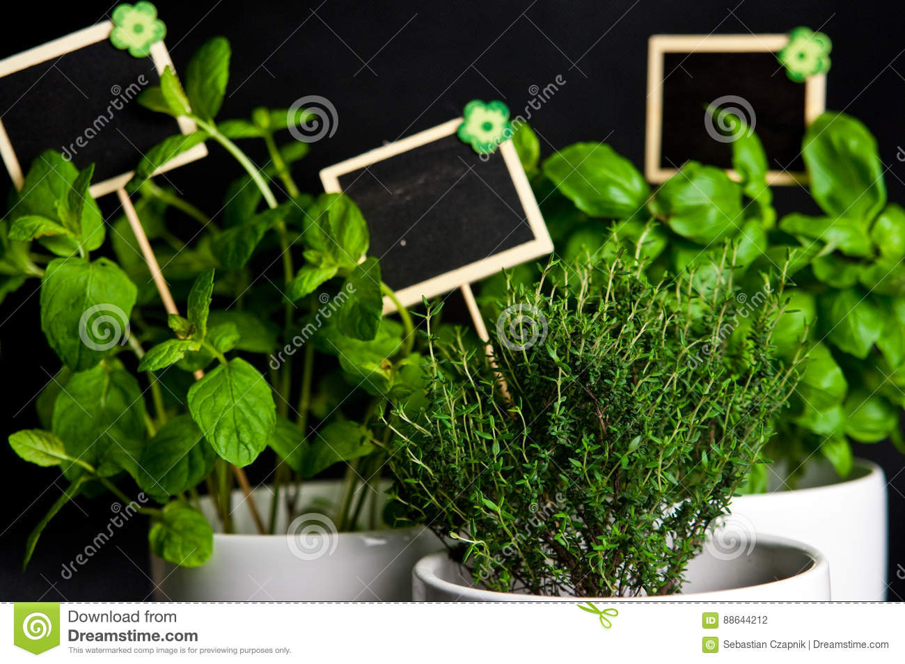 Herbs in white pot on black background. Basil, thyme and mint.