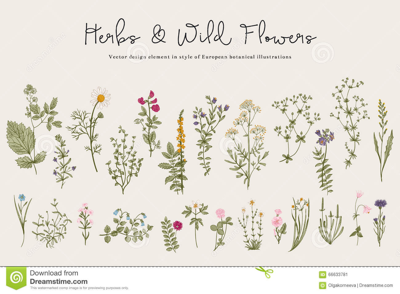 Herbs and Wild Flowers.
