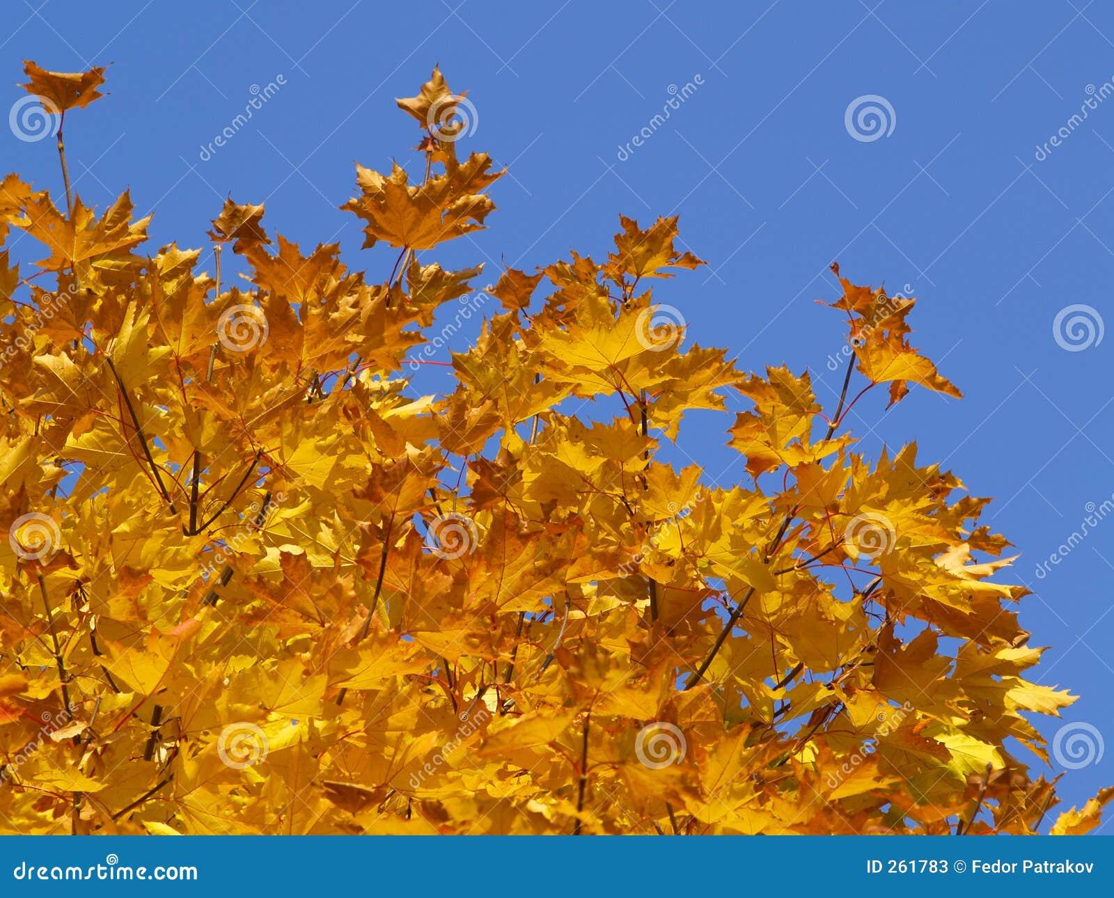 Herbst [11]