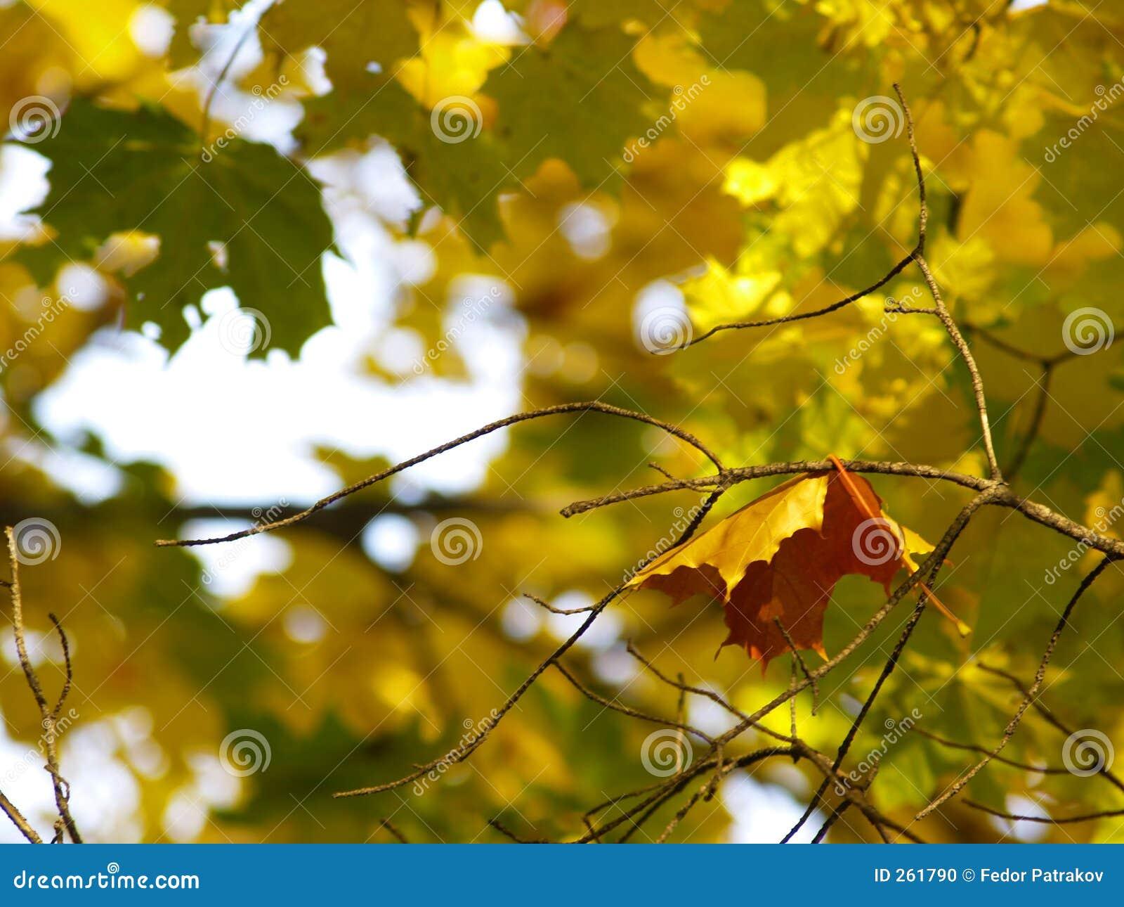 Herbst [18]