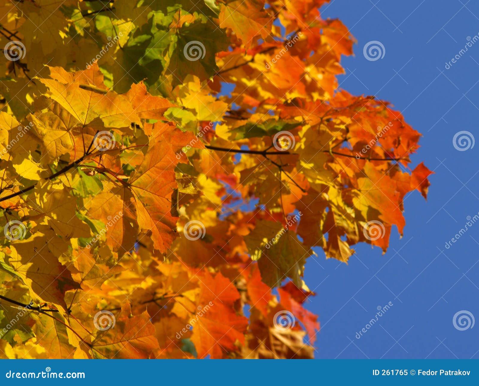 Herbst [8]