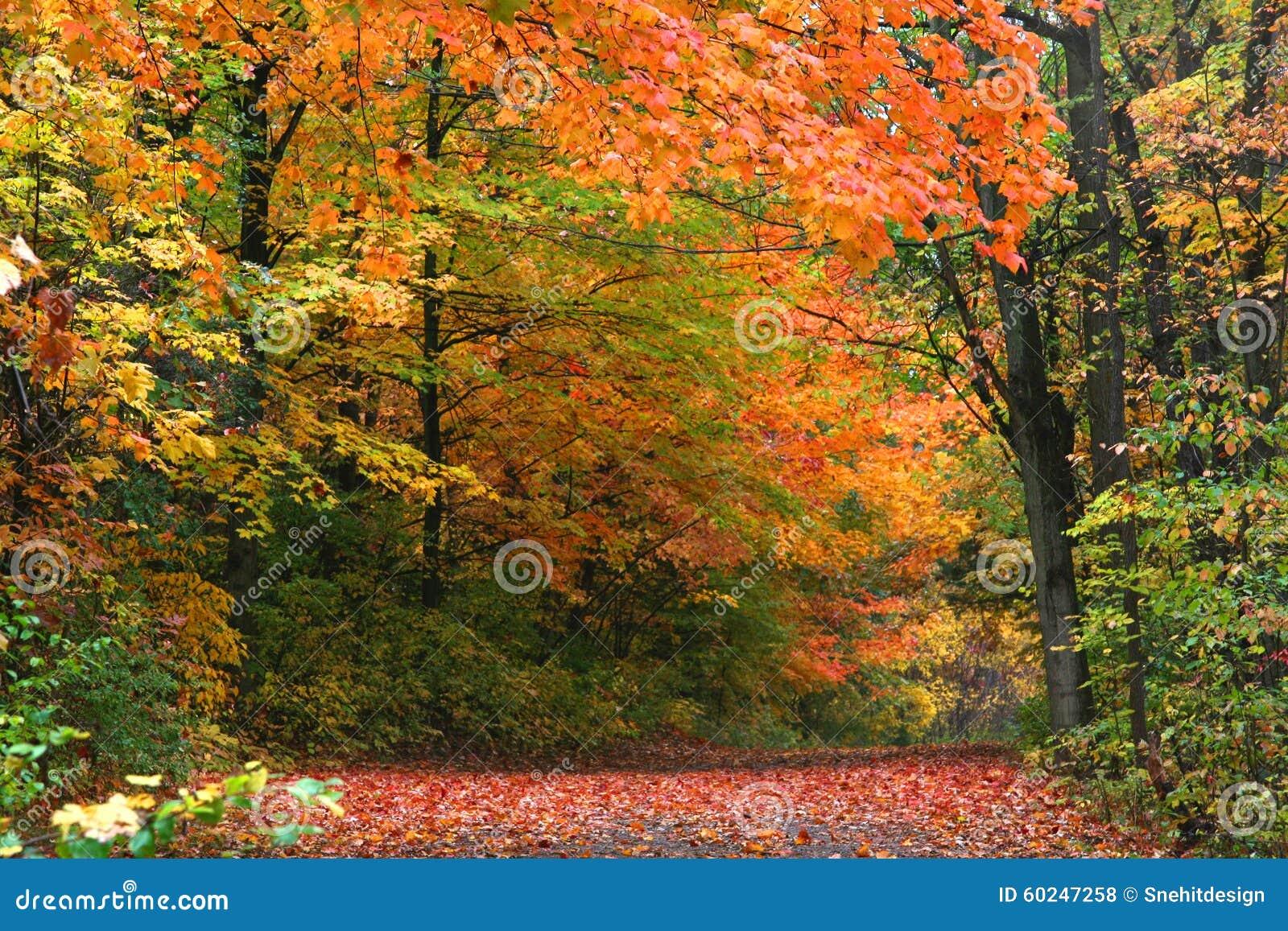 Herbst in Allegheny