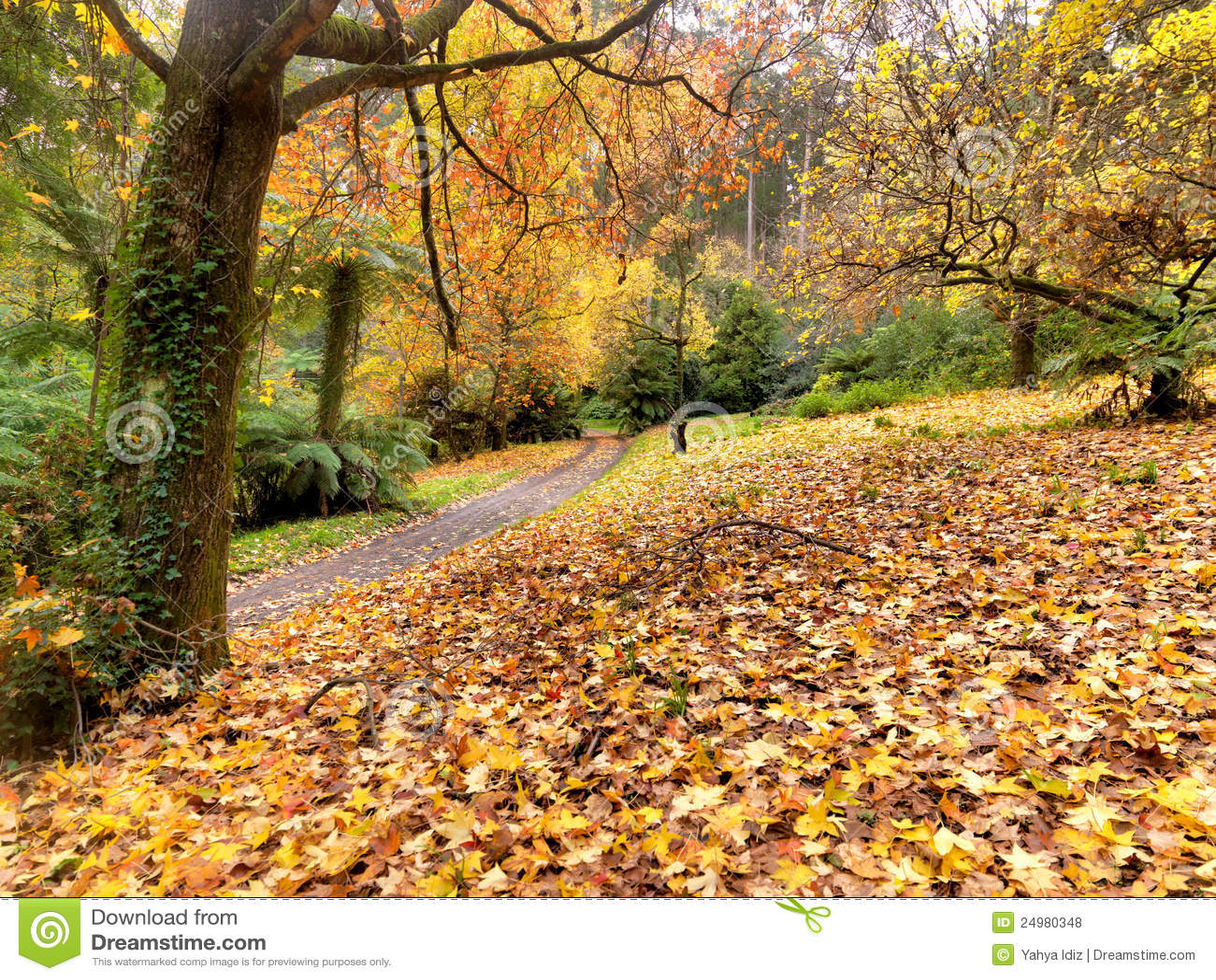 Herbst auf der Landstraße