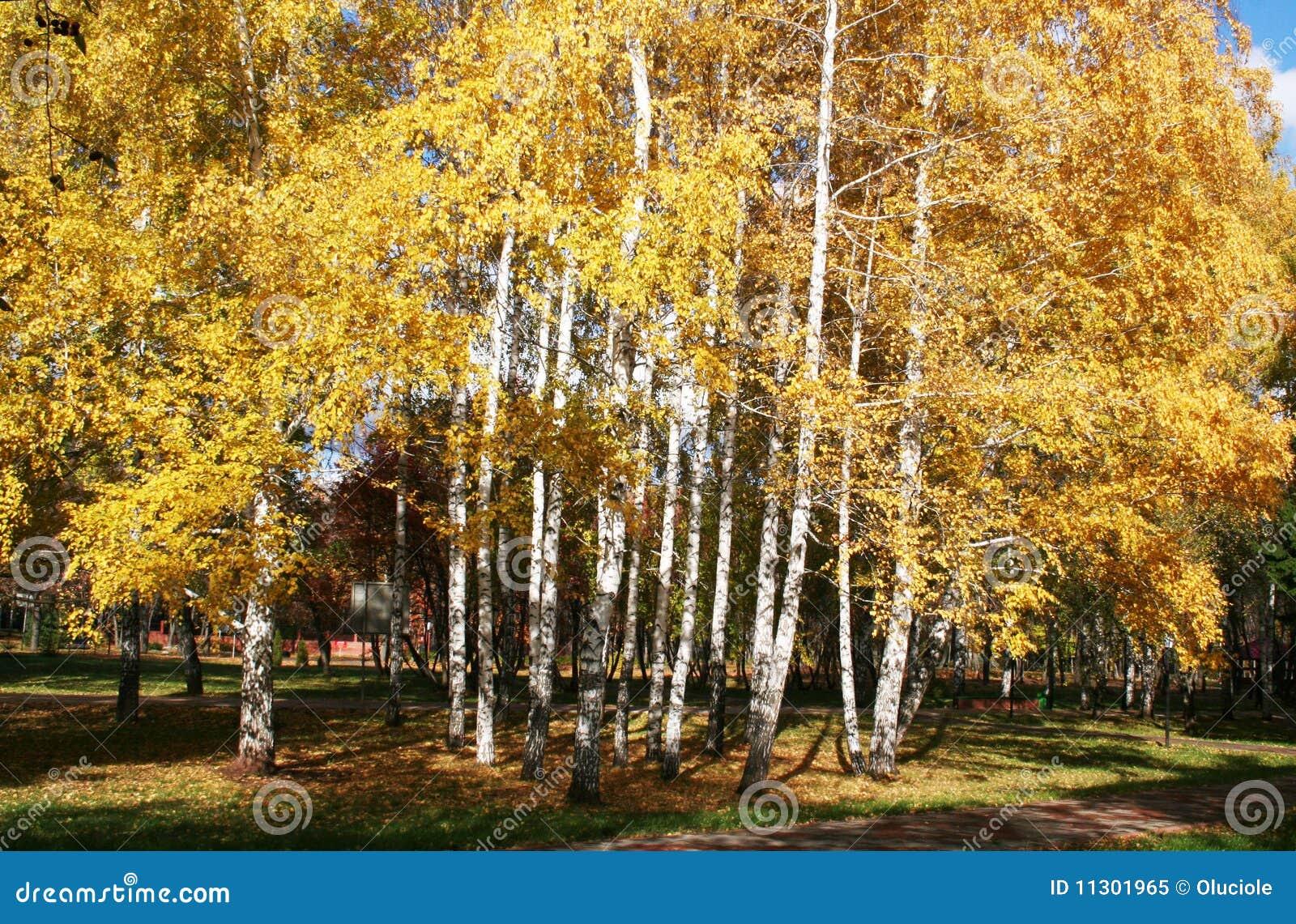 Herbst birchs