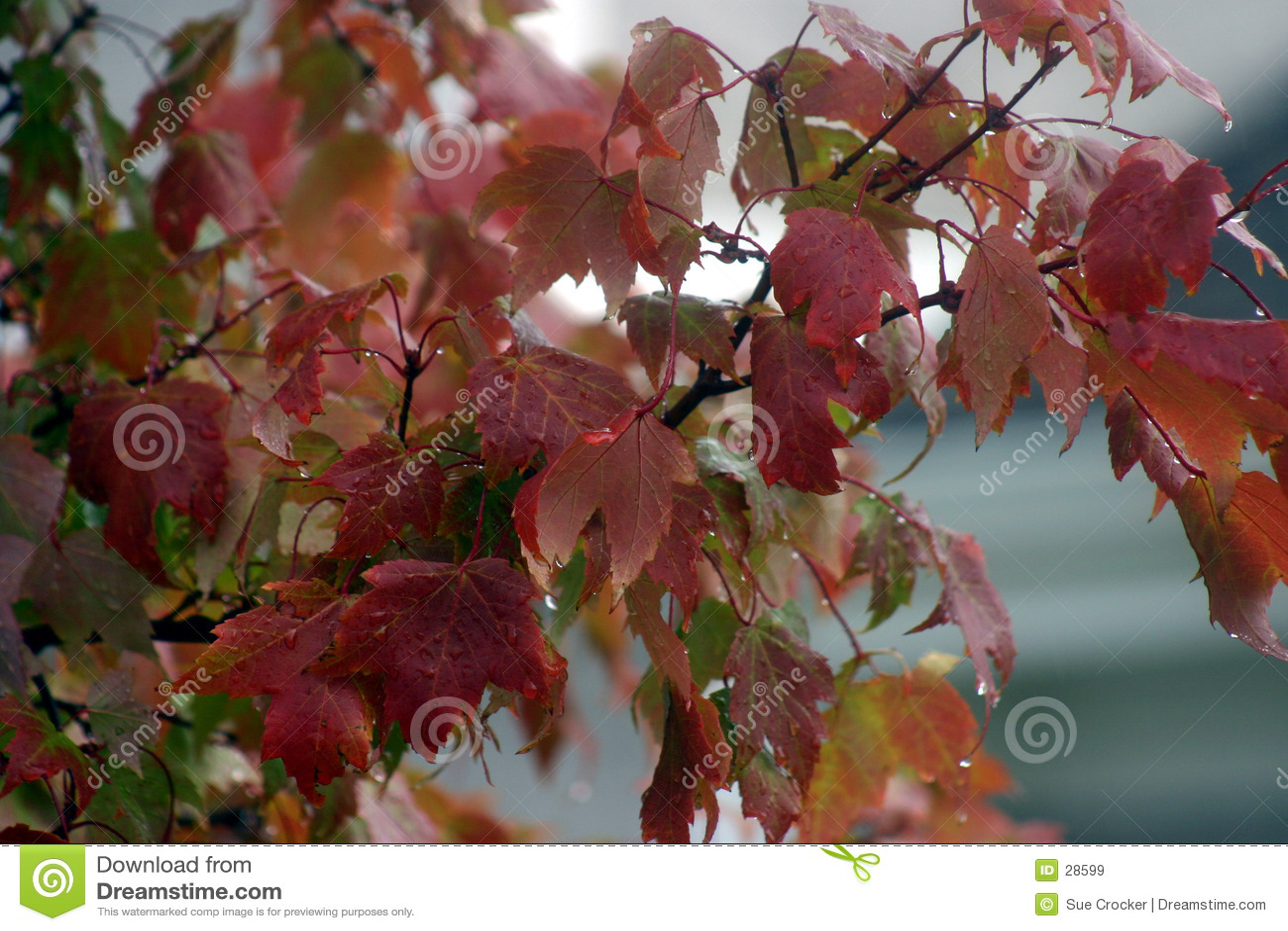 Herbst-Blätter im Regen
