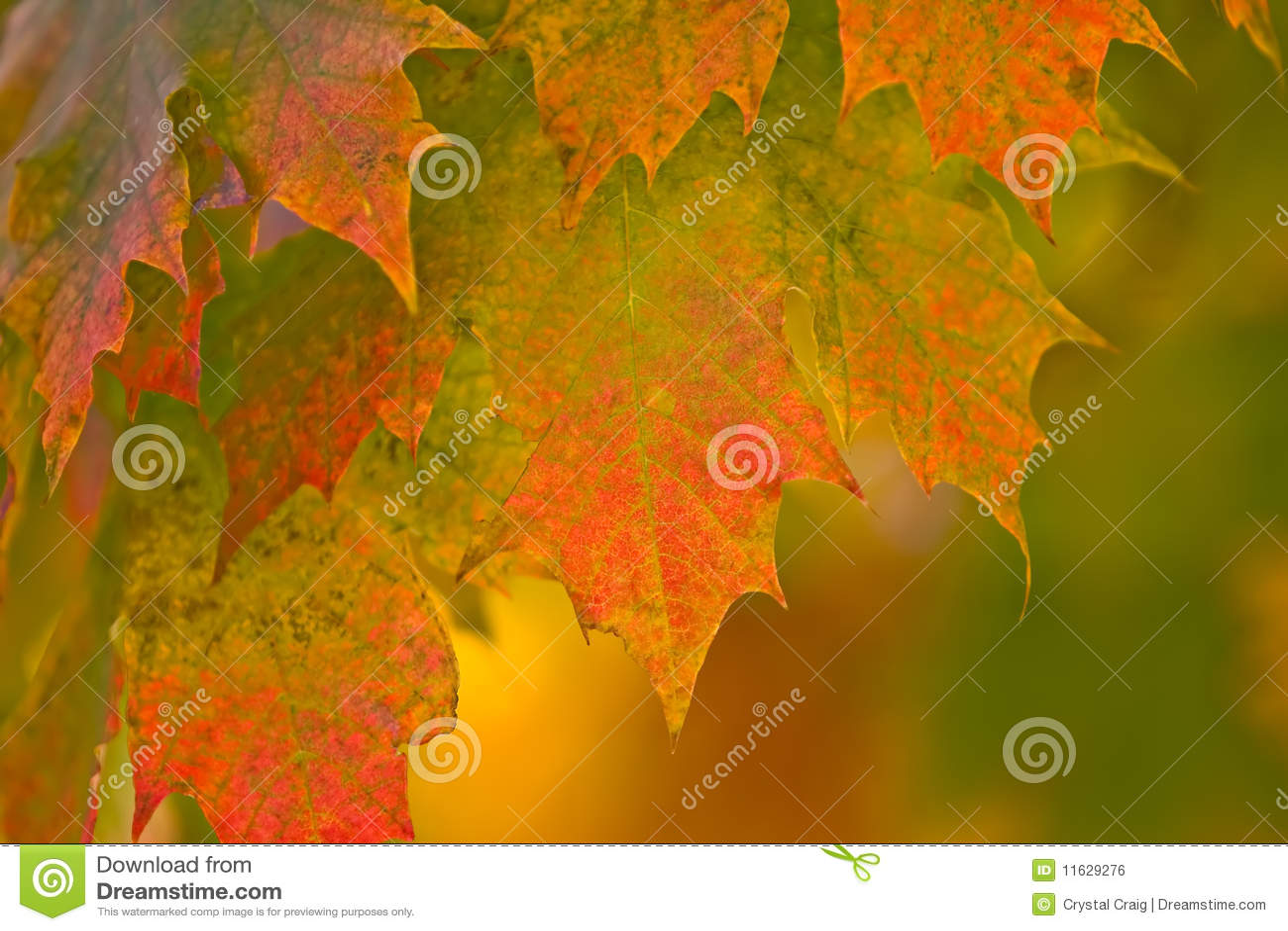 Herbst-Fall-Blätter