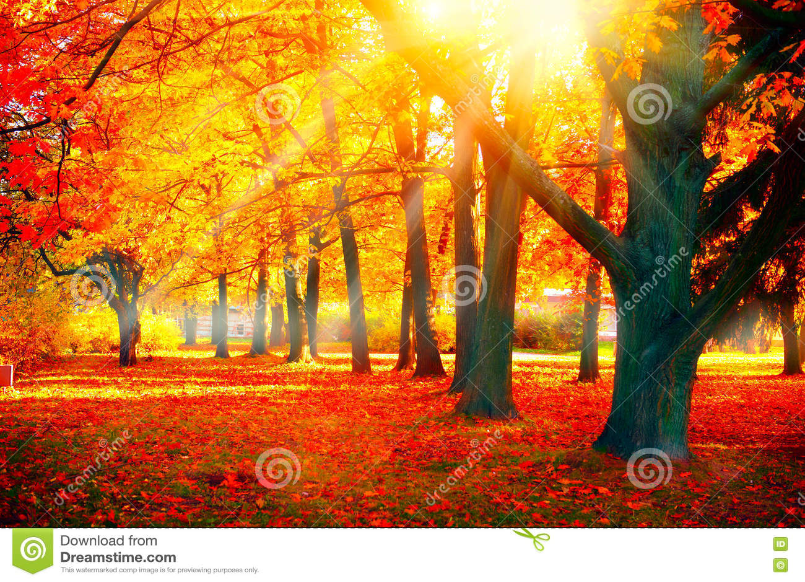 Herbst Fallnaturszene Herbstlicher Park