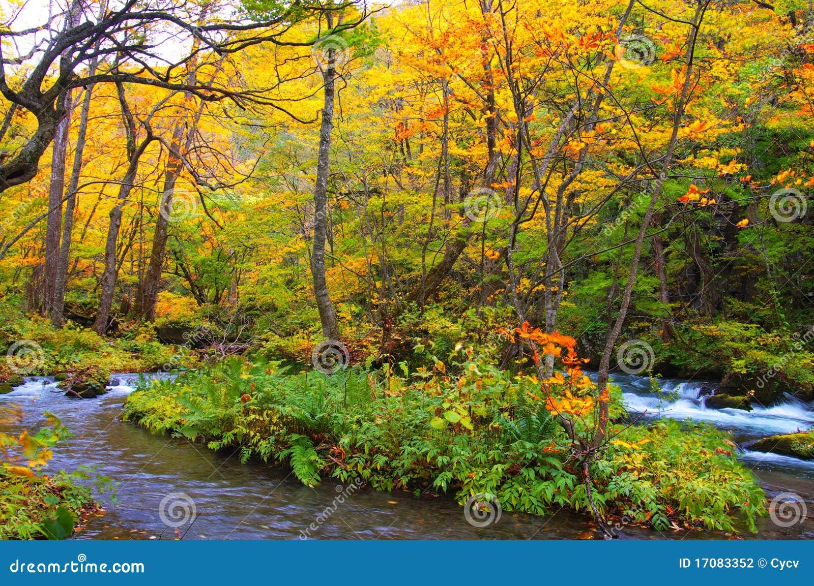 Herbst-Farben von Oirase Fluss