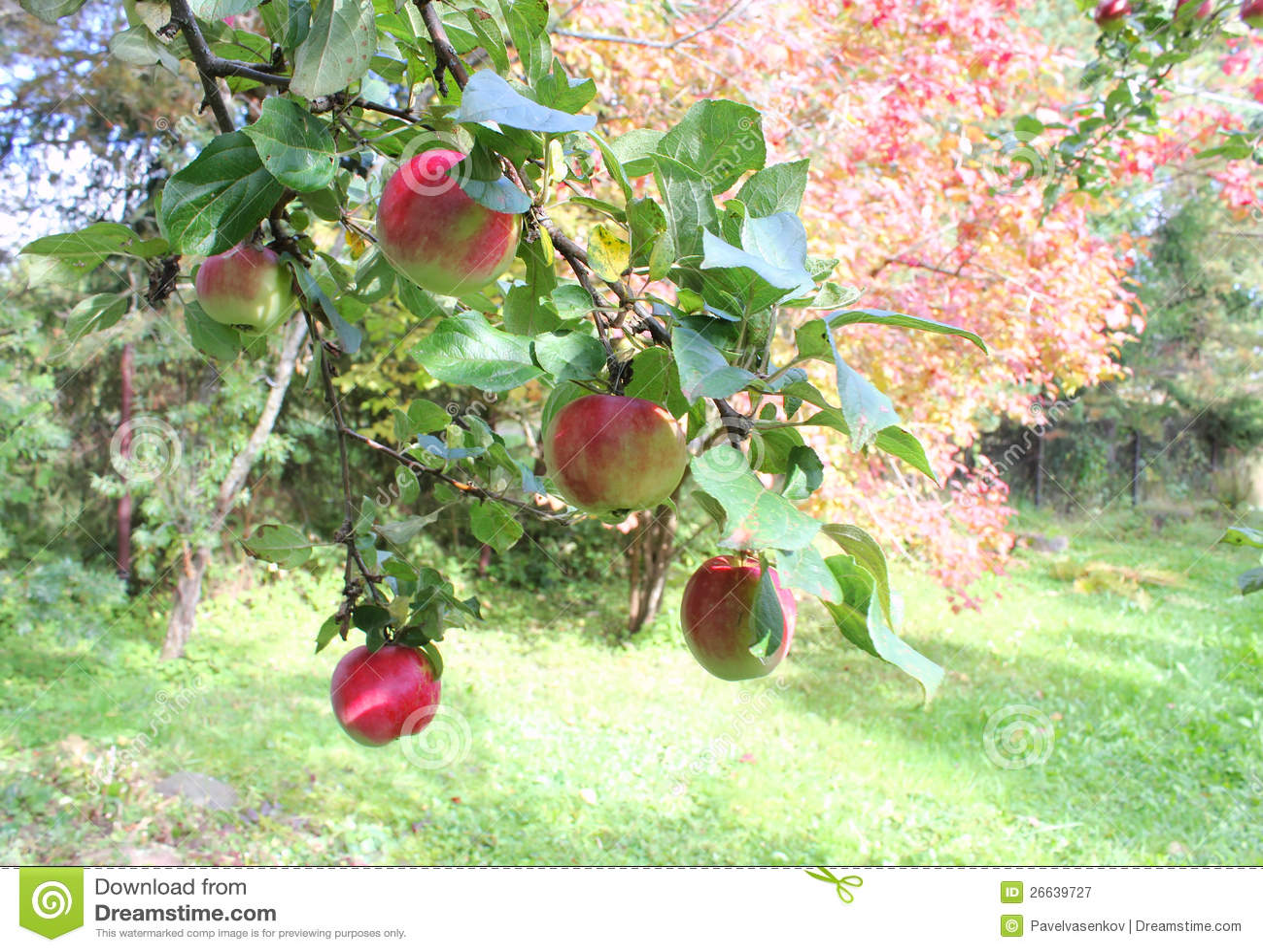 Herbst garten lizenzfreie stockfotografie bild 26639727 - Herbst garten ...