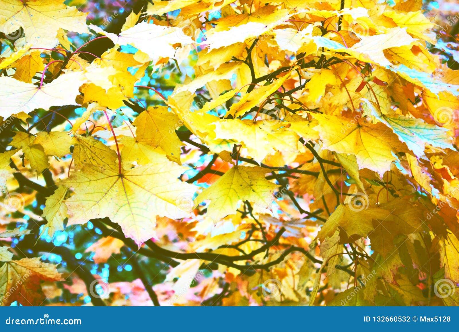 Herbst im Park und auf den Straßen