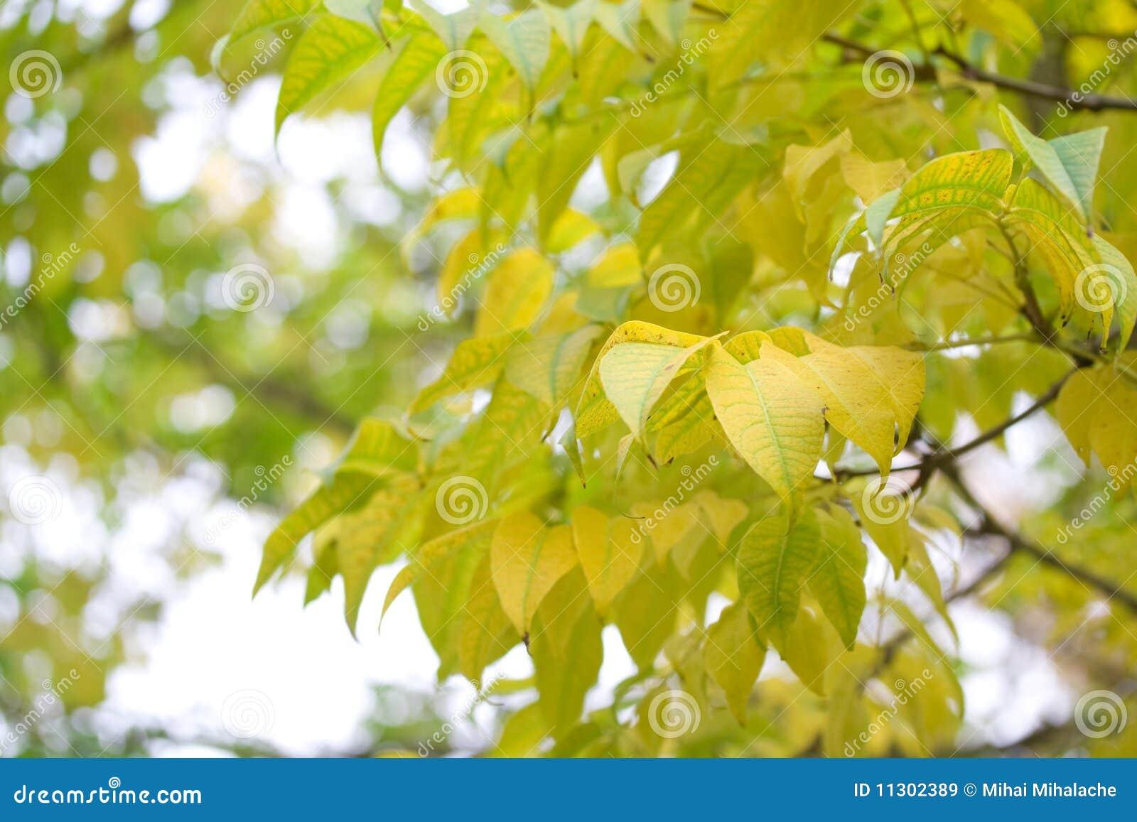 Herbst kommt