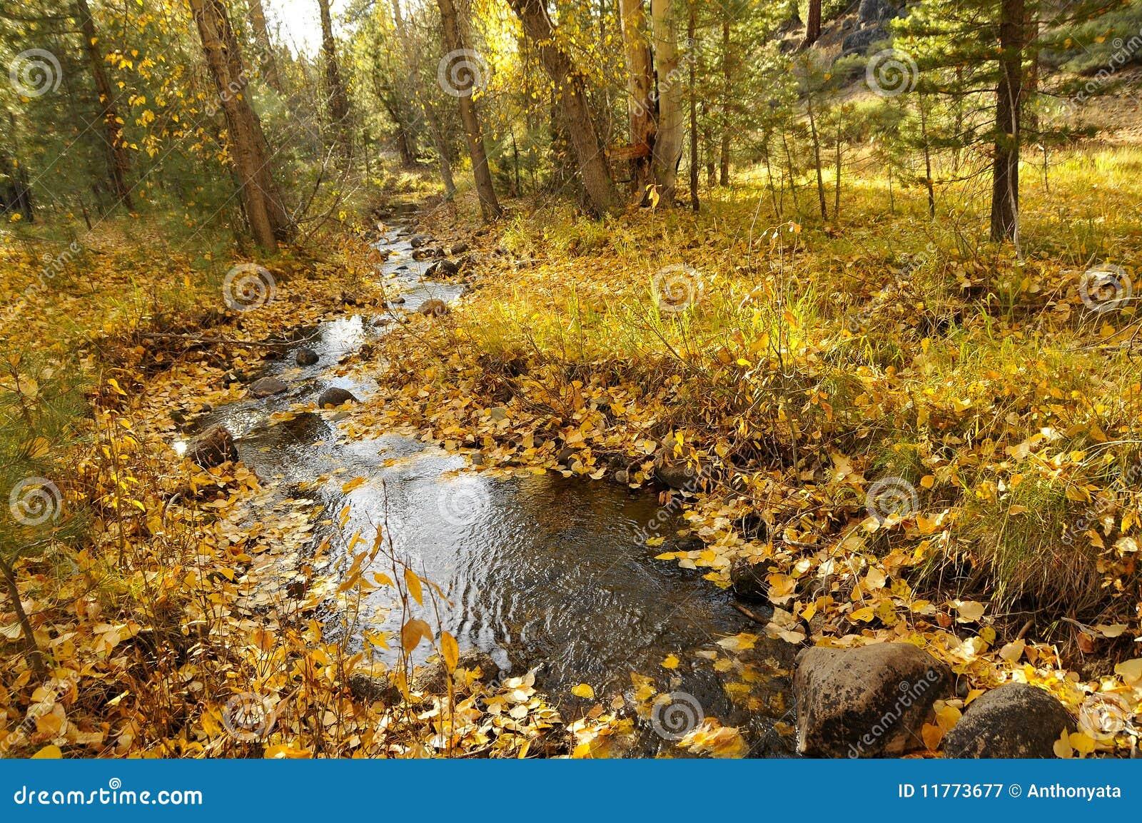 Herbst-Nebenfluss