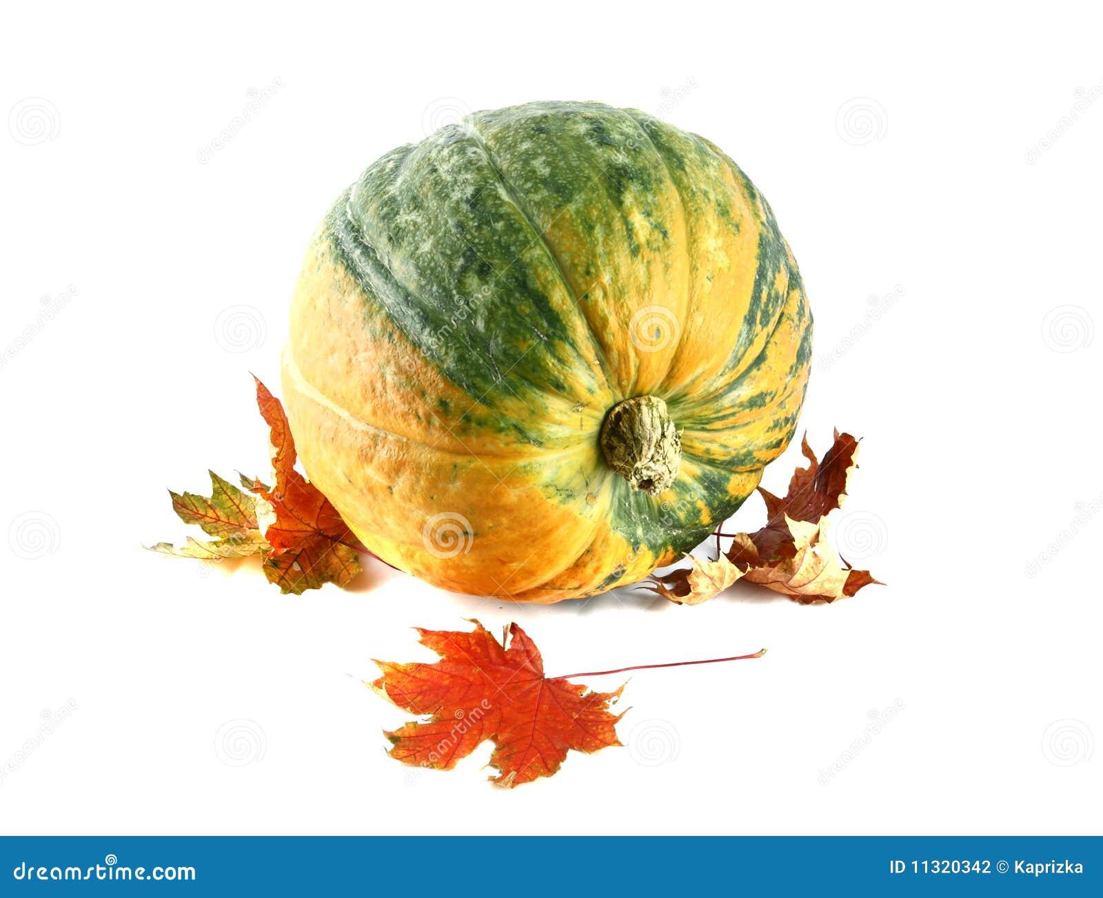 Herbst-noch Leben