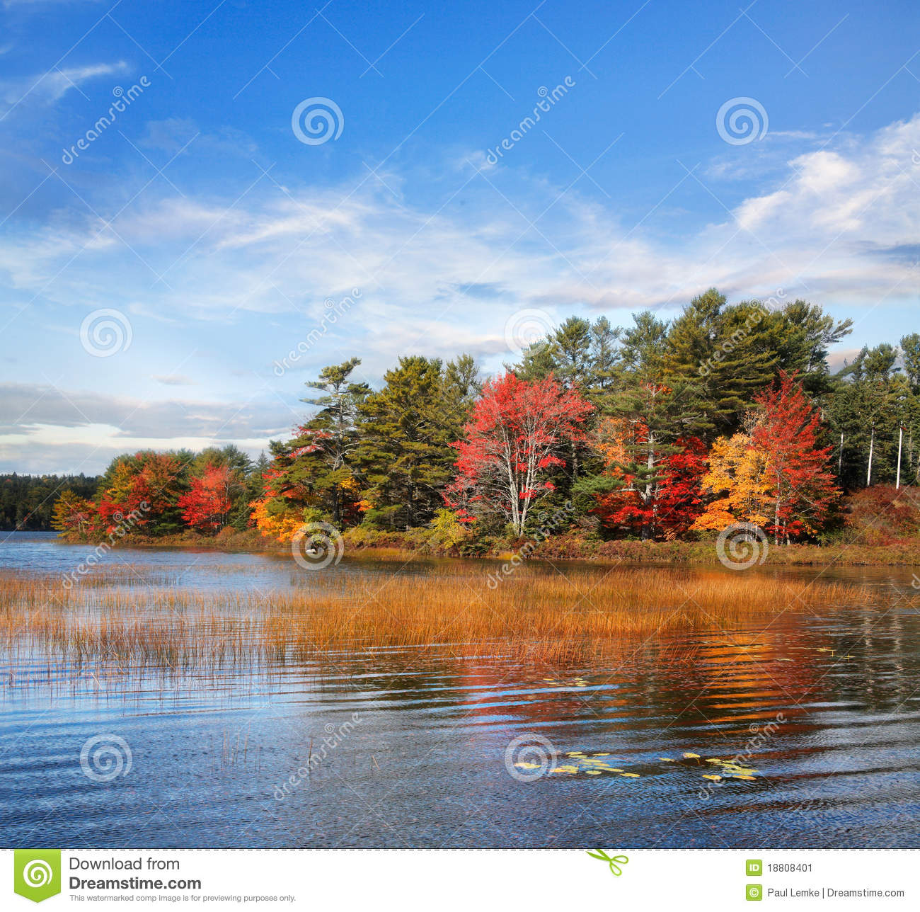 Herbst in Somes Teich