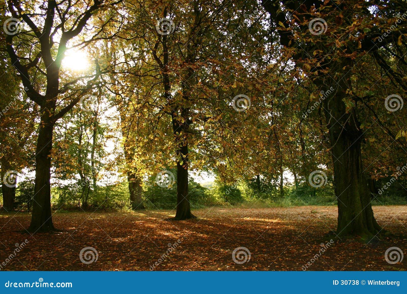 Download Herbst-Tag I stockfoto. Bild von grün, blätter, herbst, wald - 30738