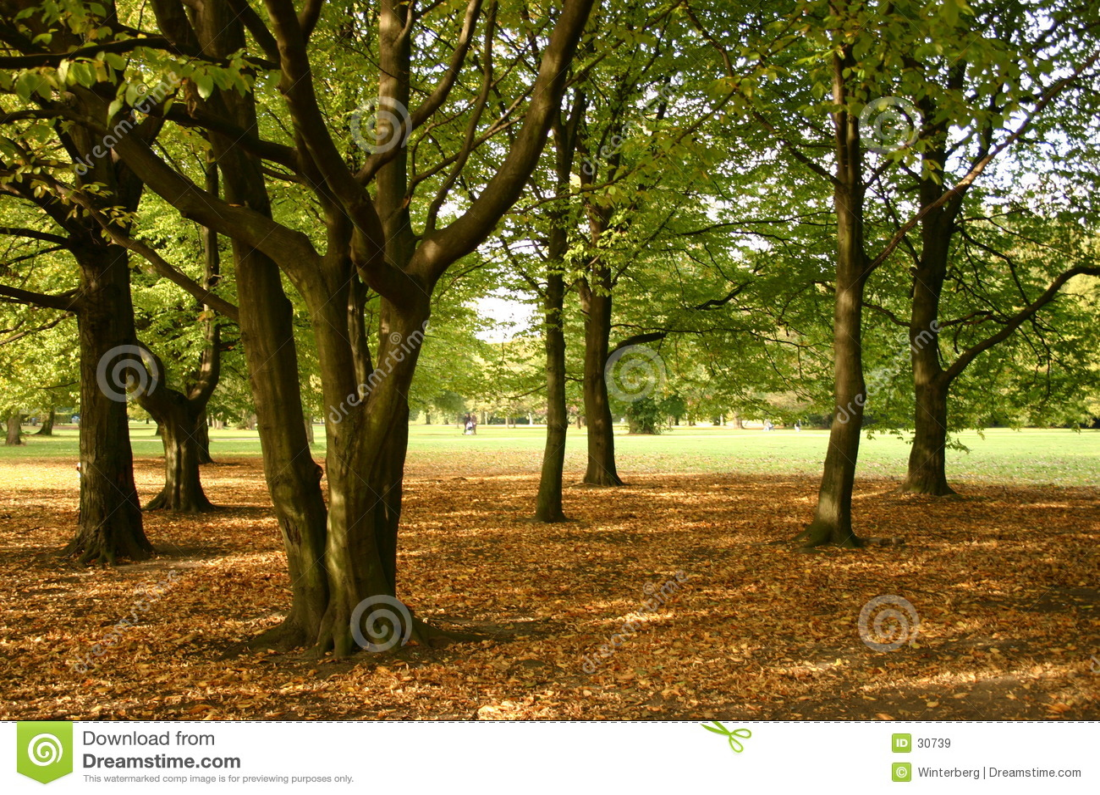 Herbst-Tag II