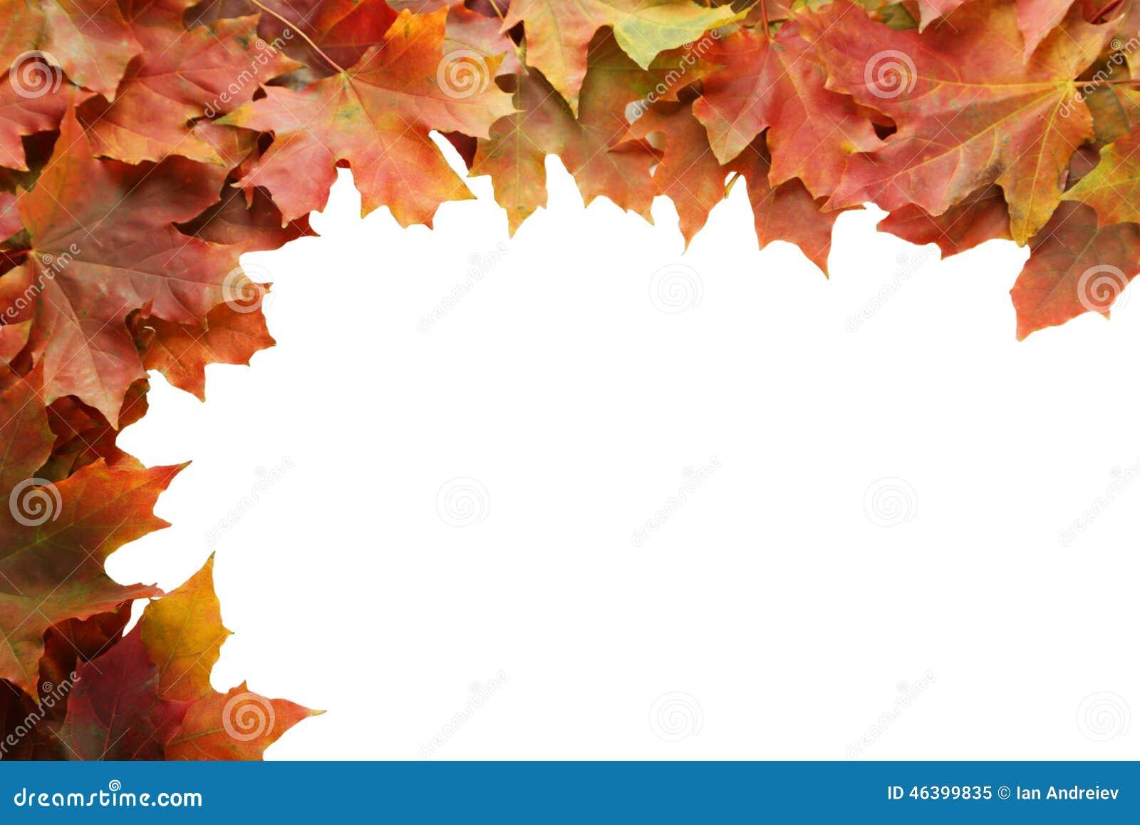 Herbst Treibt Rahmen Auf Weissem Hintergrund Blatter Stockbild Bild