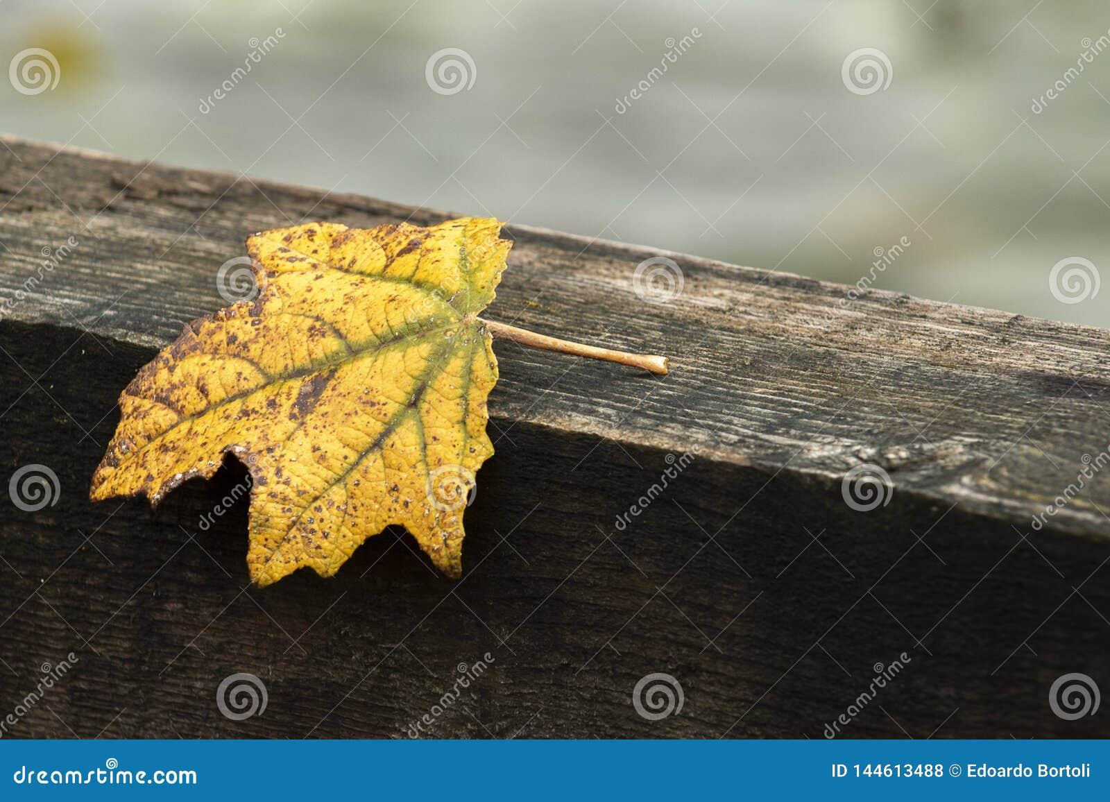 Herbst und gelbes Blatt