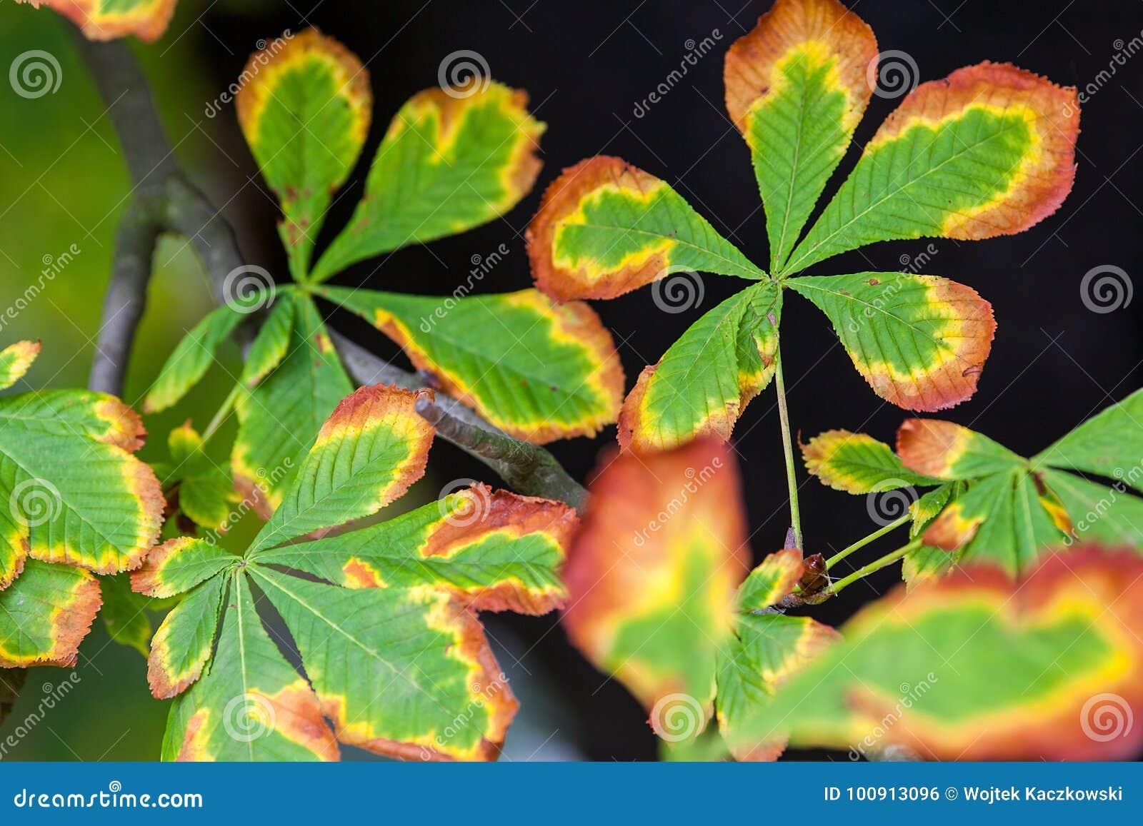 Herbst und Natur stockfoto. Bild von frucht, farbe, garten - 100913096