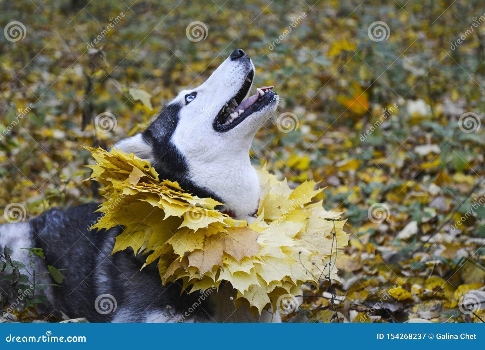 Herbst Weg im Wald mit einem Haustier